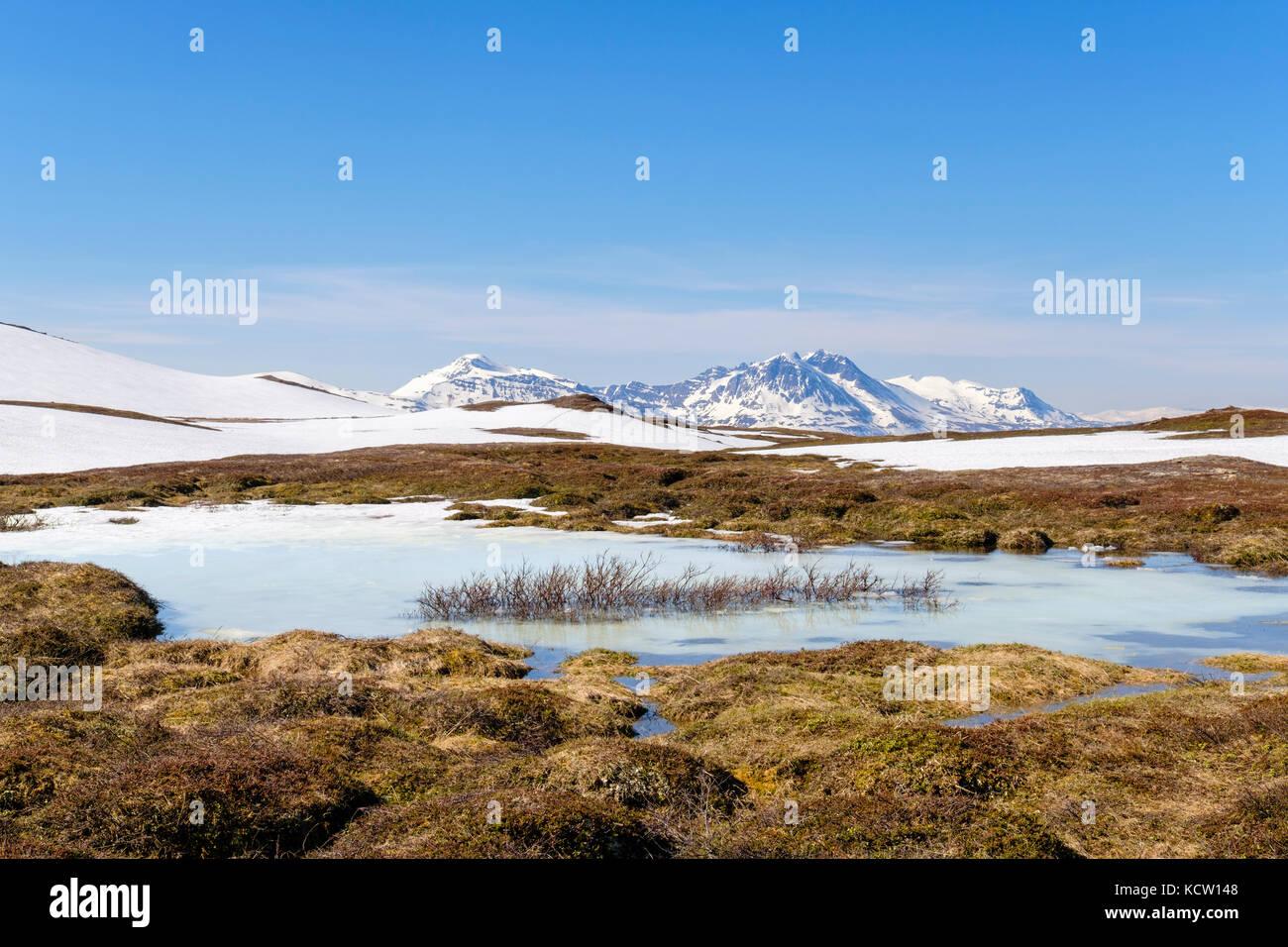 Gefrorenen Teich in der arktischen Tundra Landschaft auf dem Berg Storsteinen im Sommer. Tromso, Troms, Norwegen, Stockbild