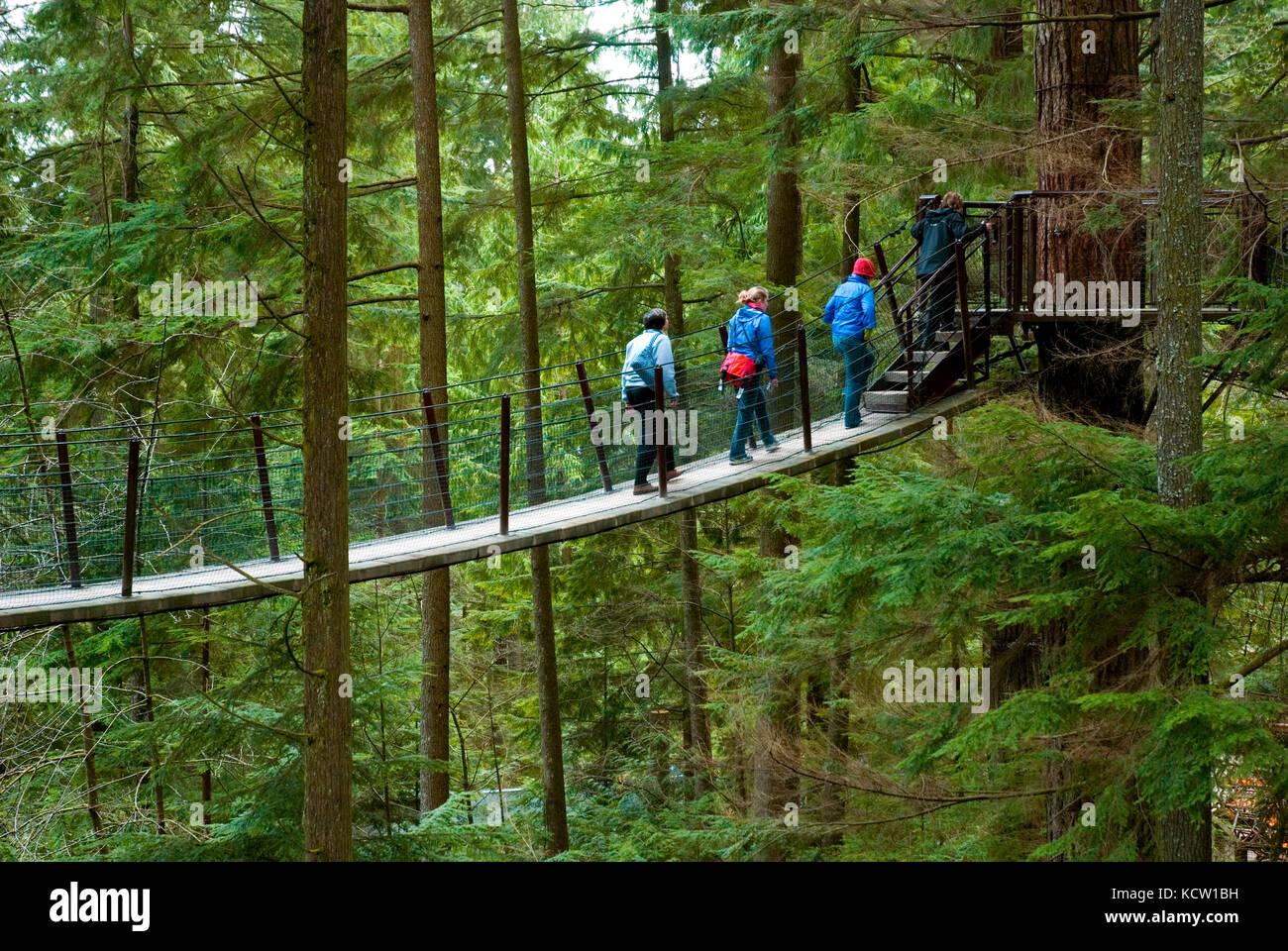Treetops Adventure in der capilano Park, Vancouver, British Columbia, Kanada Stockbild