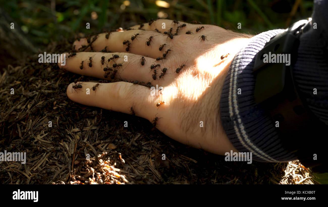 Des Menschen Hand mit einem Schwarm von Ameisen. kleine Ameisen kriechen auf die Hand eines Mannes Stockbild