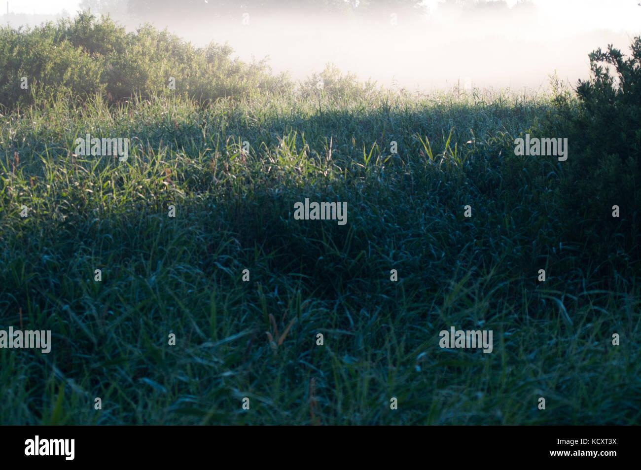 Weißen Morgennebel über grüne, tiefe Rasenfläche. Wald dahinter. Stockbild
