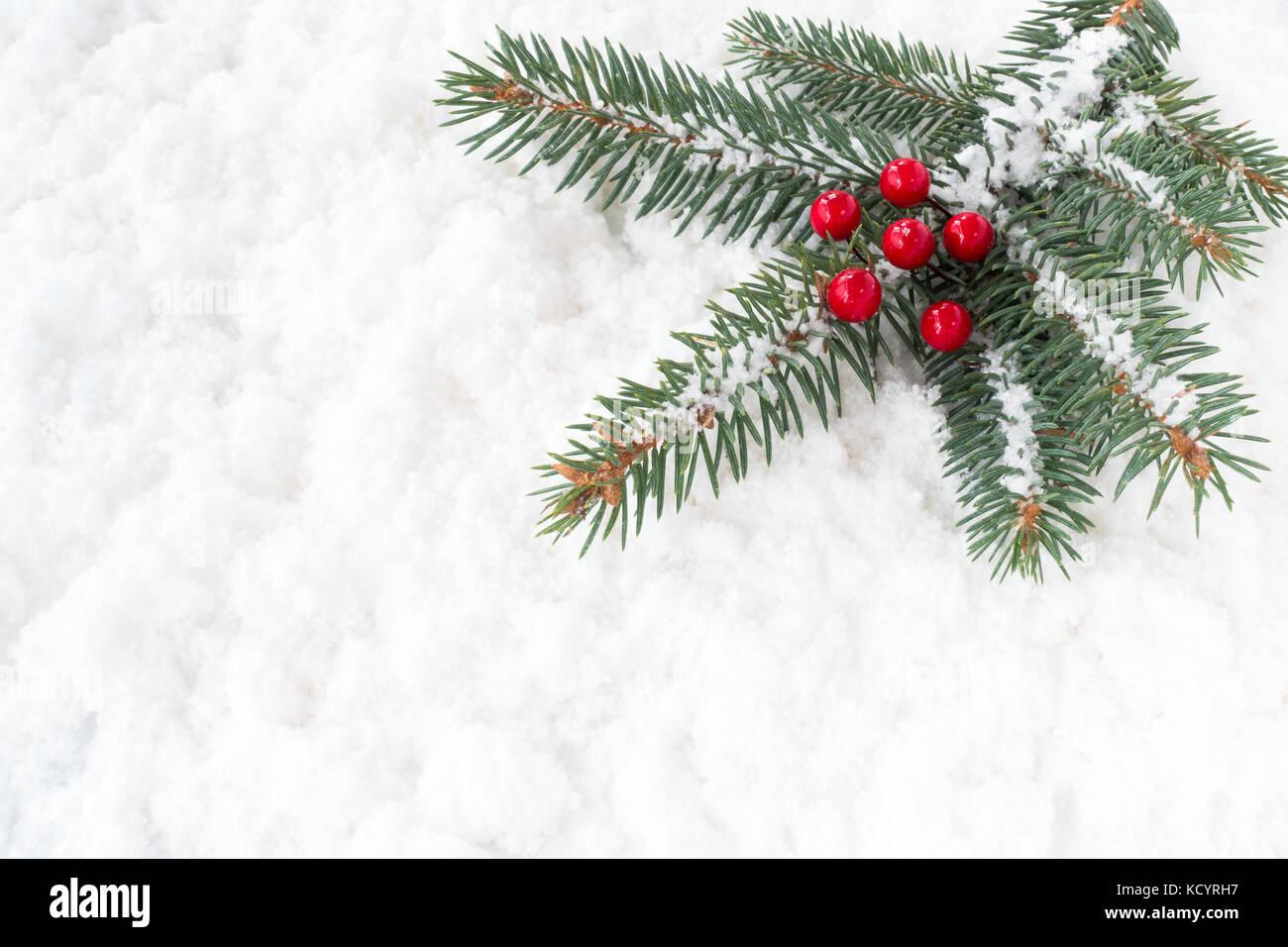 Weihnachtsbaum Fällen.Weihnachtsbaum Tanne Zweig Mit Roten Stechpalme Beeren Mit