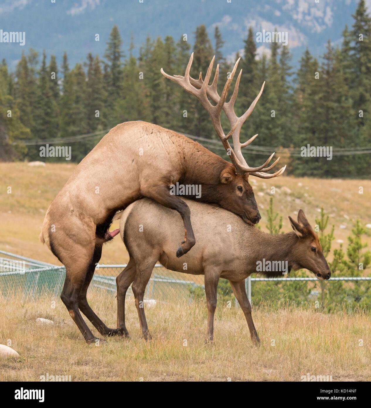 Jasper National Park To Elk Island National Park