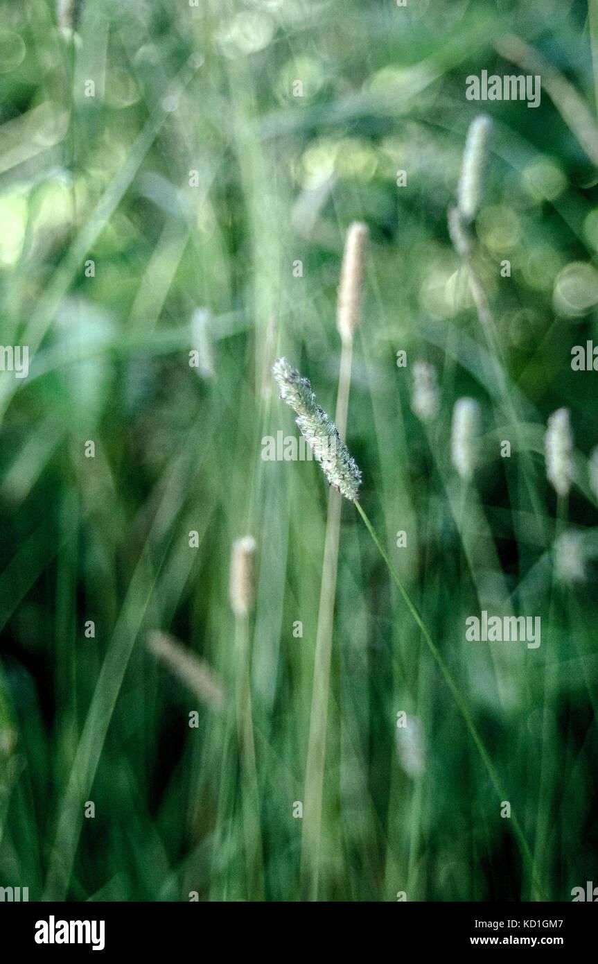 Grüne Felder Gras Stockbild