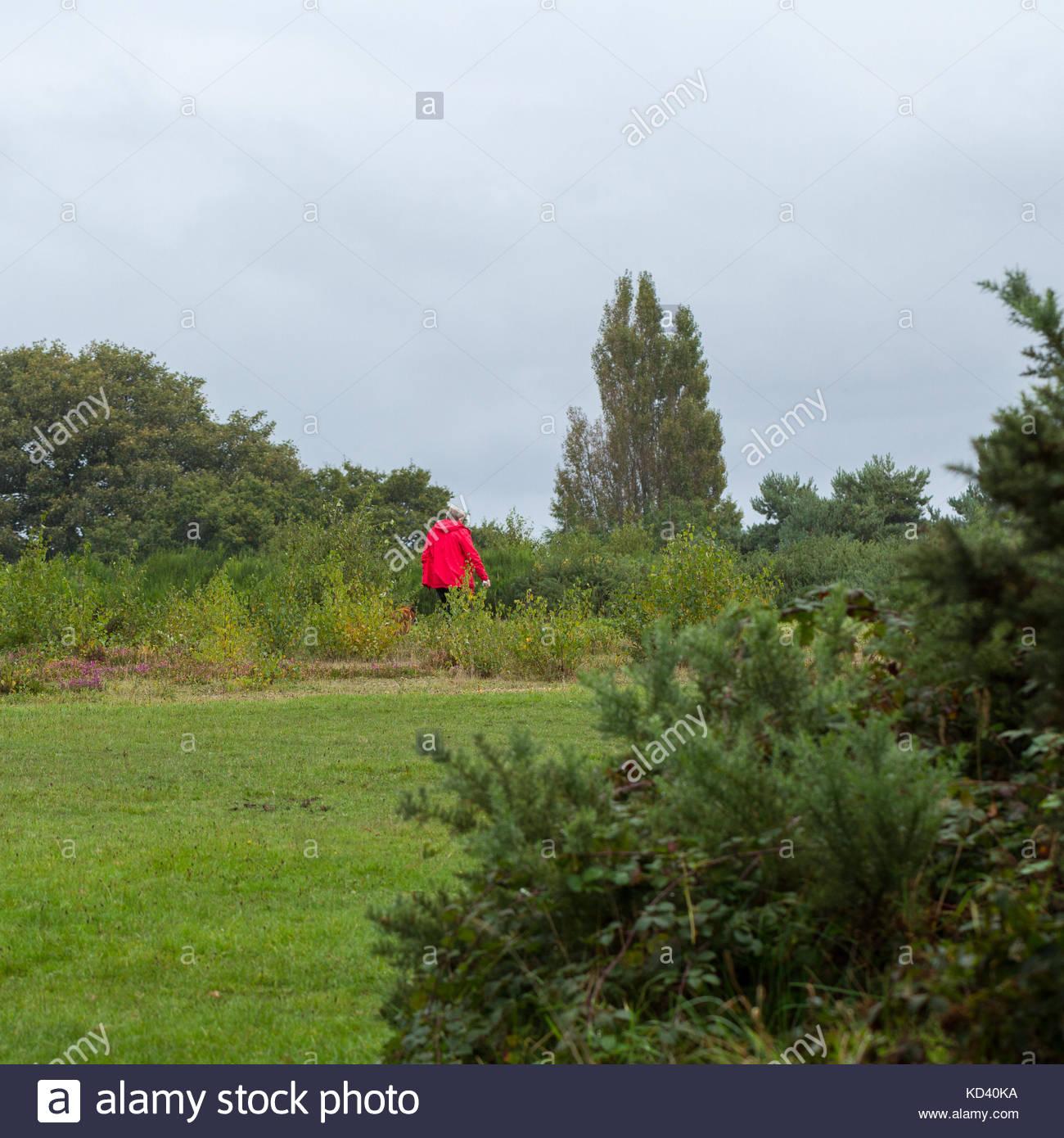 Ein Hund Walker in einem roten Mantel gehen auf gemeinsame Land, Großbritannien Stockfoto