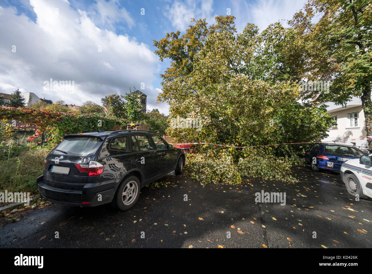 Sturm Xavier, Schäden durch fallenden Baum | sturmtief Xavier wuetet ueber Deutschland am 5.10.2017, Umgestuerzter Stockbild