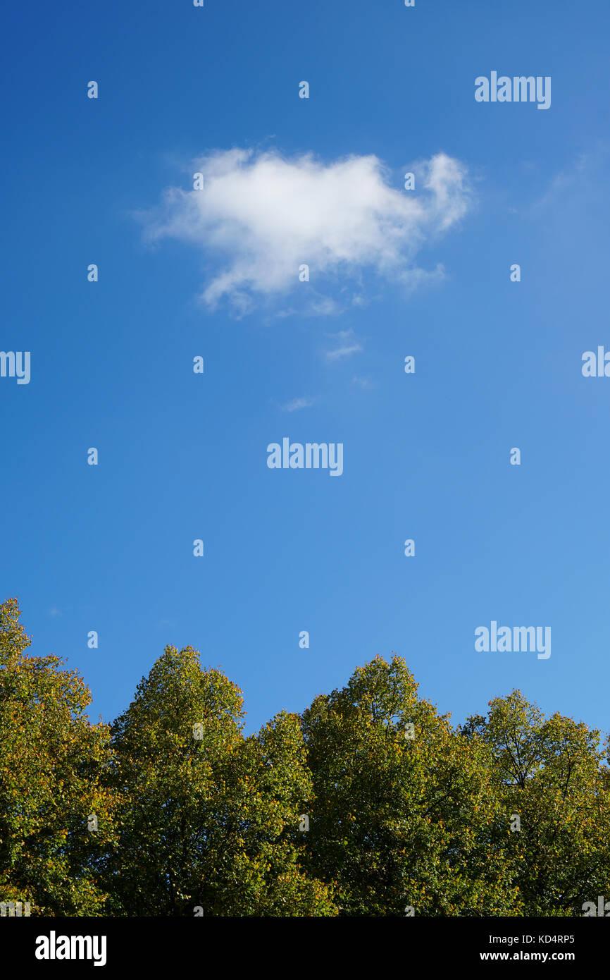 Baumwipfel und Himmel an einem sonnigen Tag Stockbild