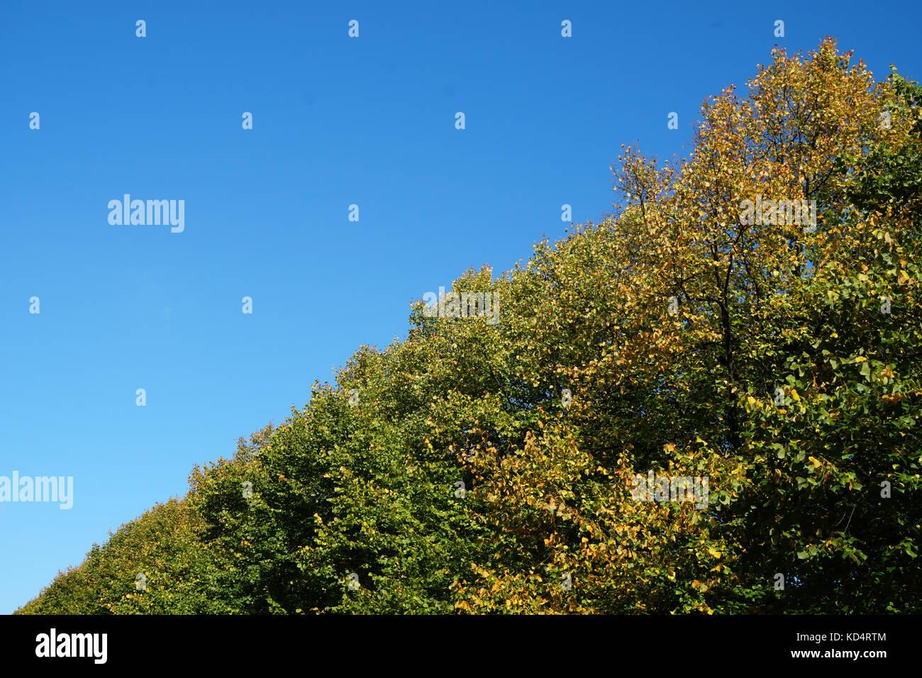 Baumkronen und klaren Himmel an einem sonnigen Tag Stockbild