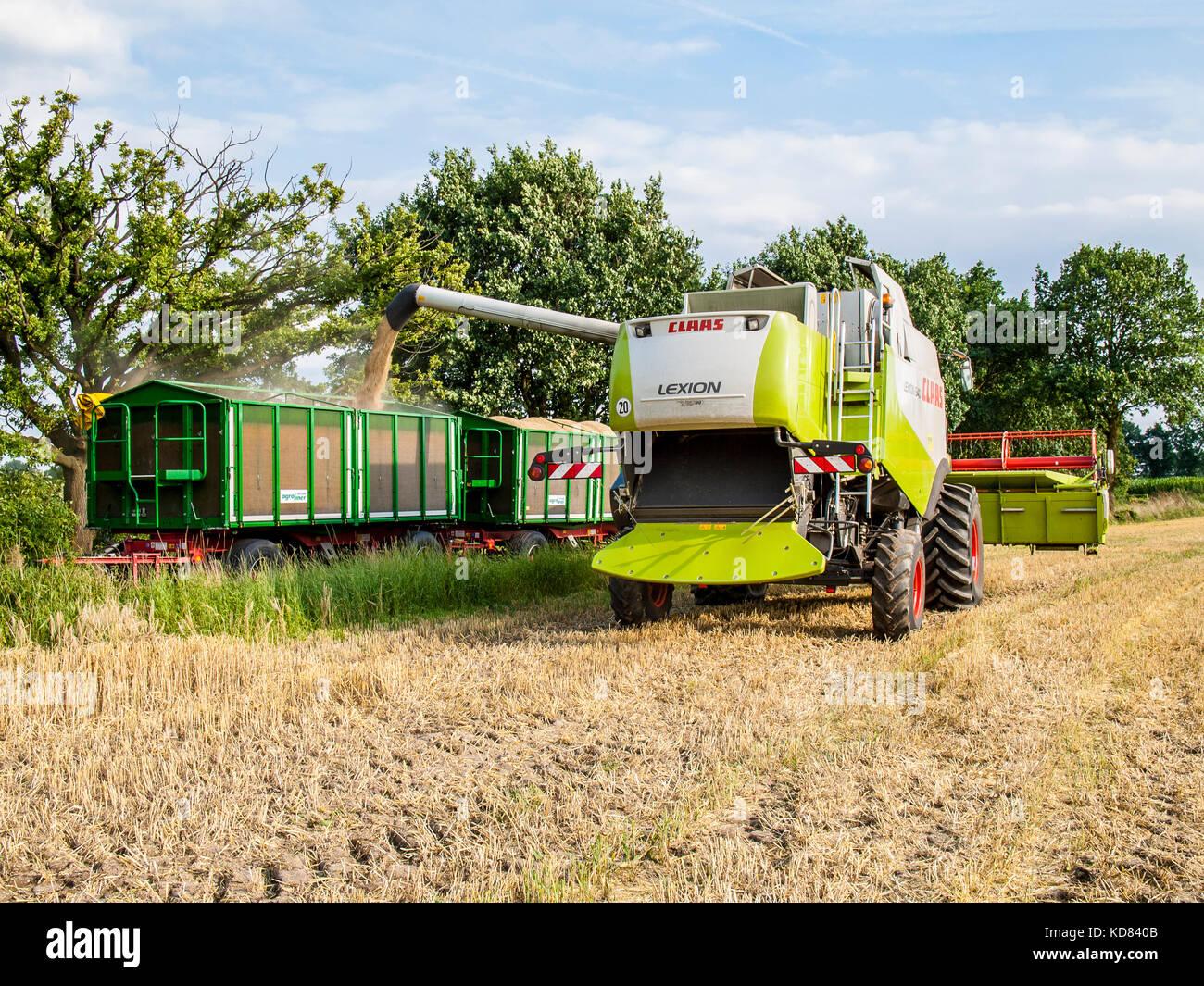Feldhäcksler in einem Feld Struktur kombinieren in Niedersachsen in der Nähe von Barum, elbmarsch, Deutschland. Stockbild