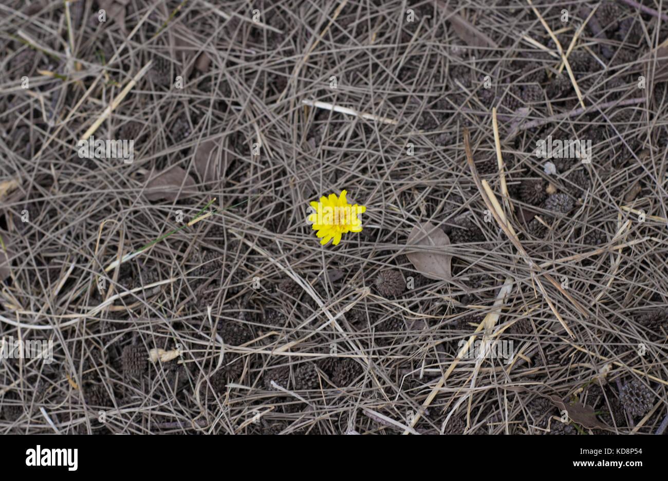 Eine einsame Blume zentriert auf dem Rahmen mit nichts aber nur ...