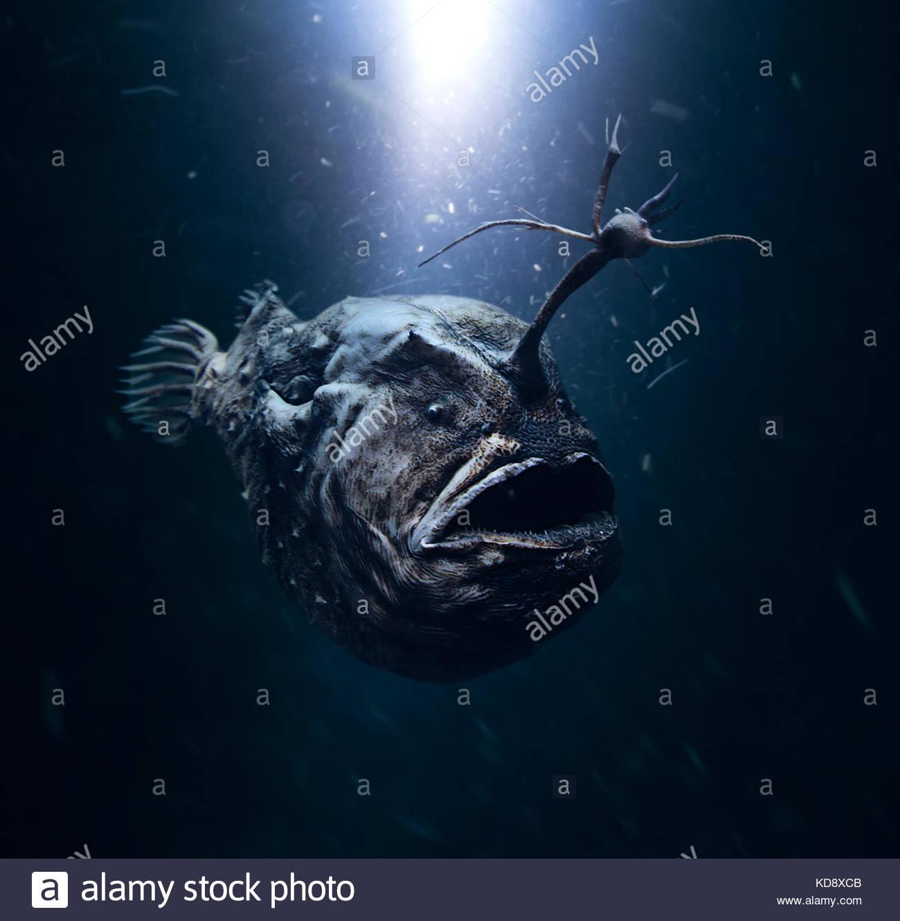 """Atlantik, Himantolophus groenlandicus footballfish. Weibliche mit modifizierten Ray auf den Kopf was eine """"Fishing Stockbild"""