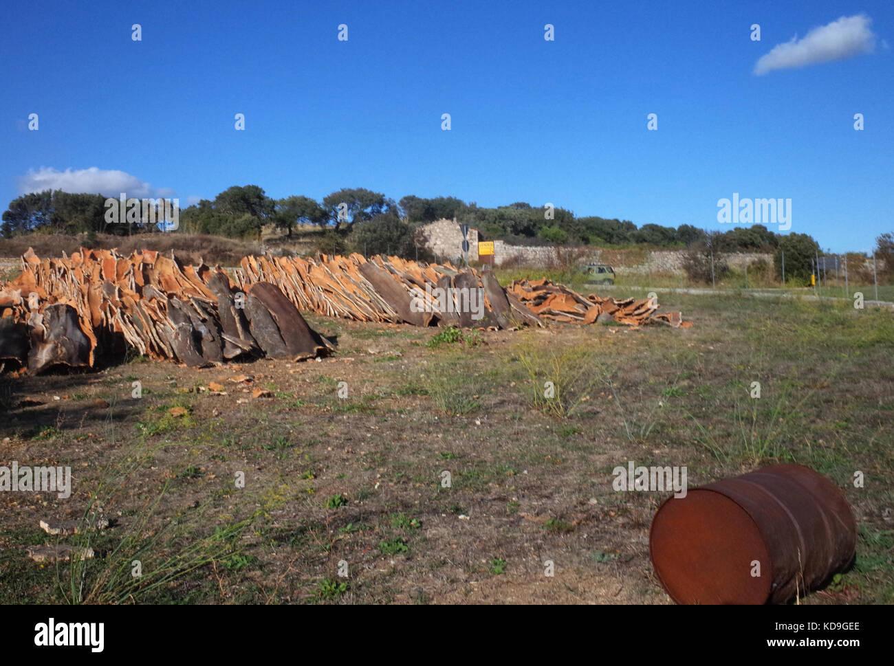Luras, Sardinien. frisch Korken in Würze abgeholt Stockbild