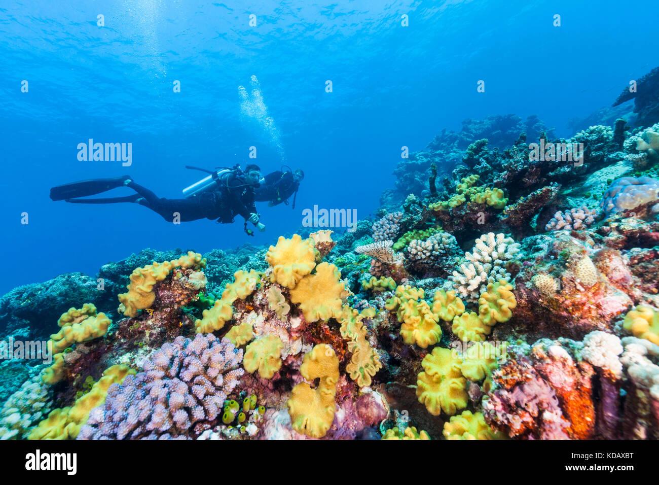 Die korallenformationen Taucher Erkunden von St. Crispin Reef, Great Barrier Reef Marine Park, Port Douglas, Queensland, Stockfoto