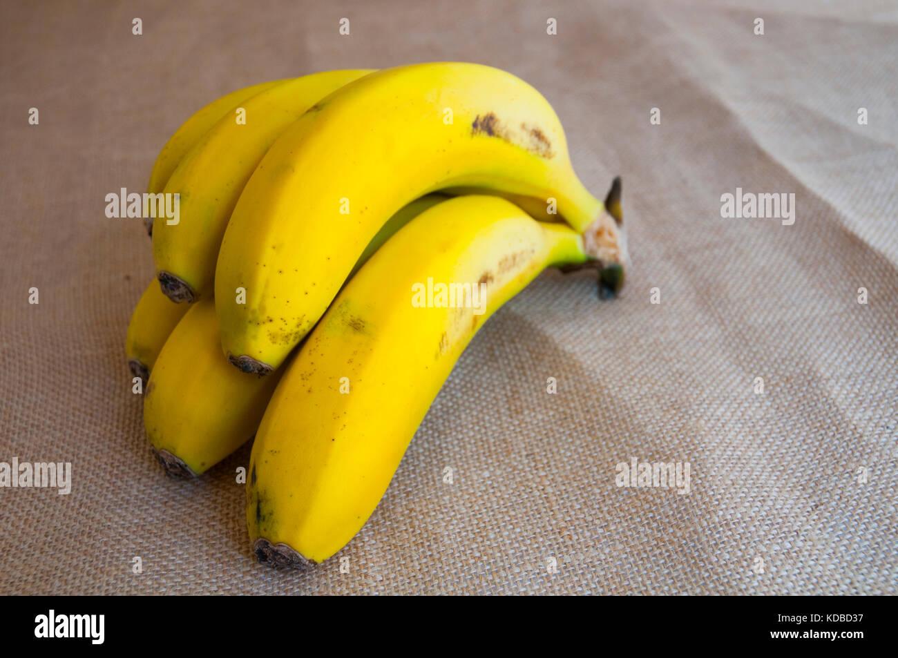 Bündel Bananen. Kanarische Inseln, Spanien. Stockbild