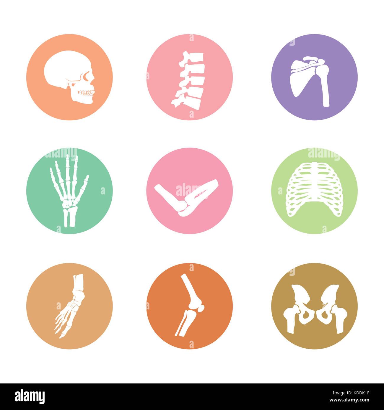 Symbol der Knochen im menschlichen Körper Stockfoto, Bild: 163184155 ...