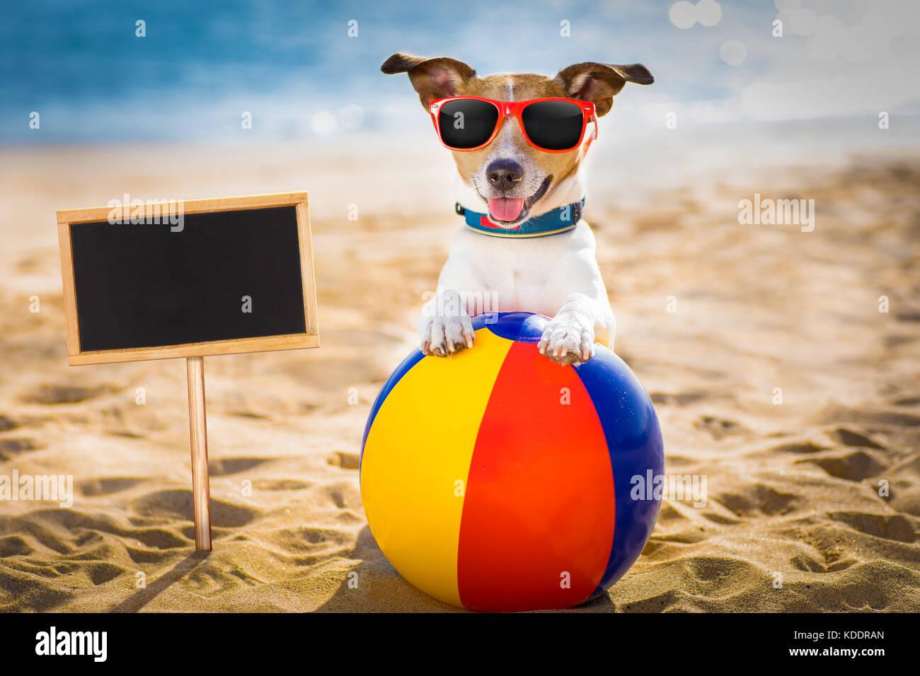 Strand ShoreIm Hund Sommerurlaub Russel Jack Am Ocean SMqzUVpLG