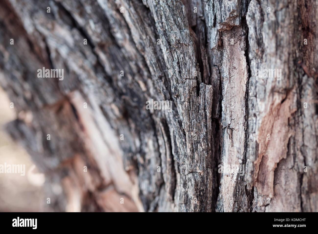 Natürliche Beleuchtung   Schonen Baum Barks Schuss In Naturliche Beleuchtung Und Farbe Alt