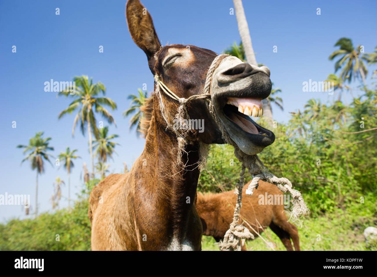 Zum lachen bilder lustige LUSTIGE BILDER!