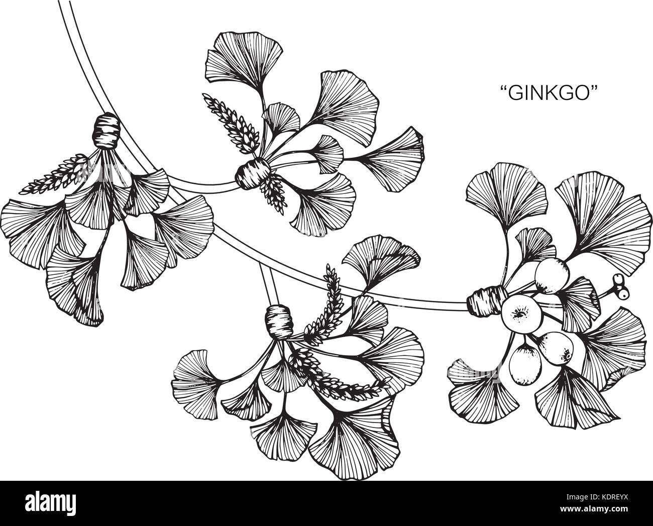 ginkgo blatt blume zeichnen abbildung schwarz und wei mit line art vektor abbildung bild. Black Bedroom Furniture Sets. Home Design Ideas