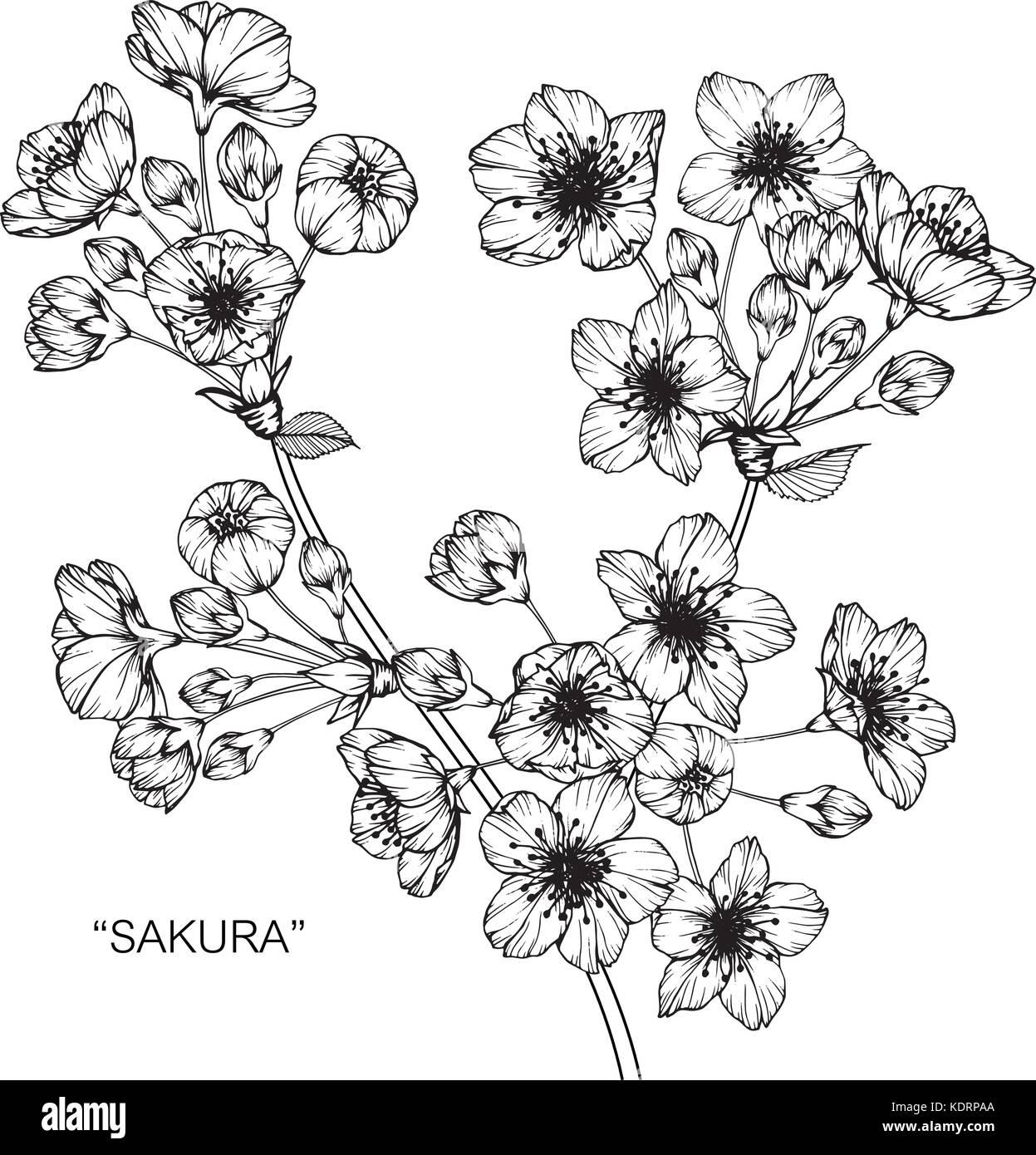 kirsche blüte blume zeichnen abbildung schwarz und weiß