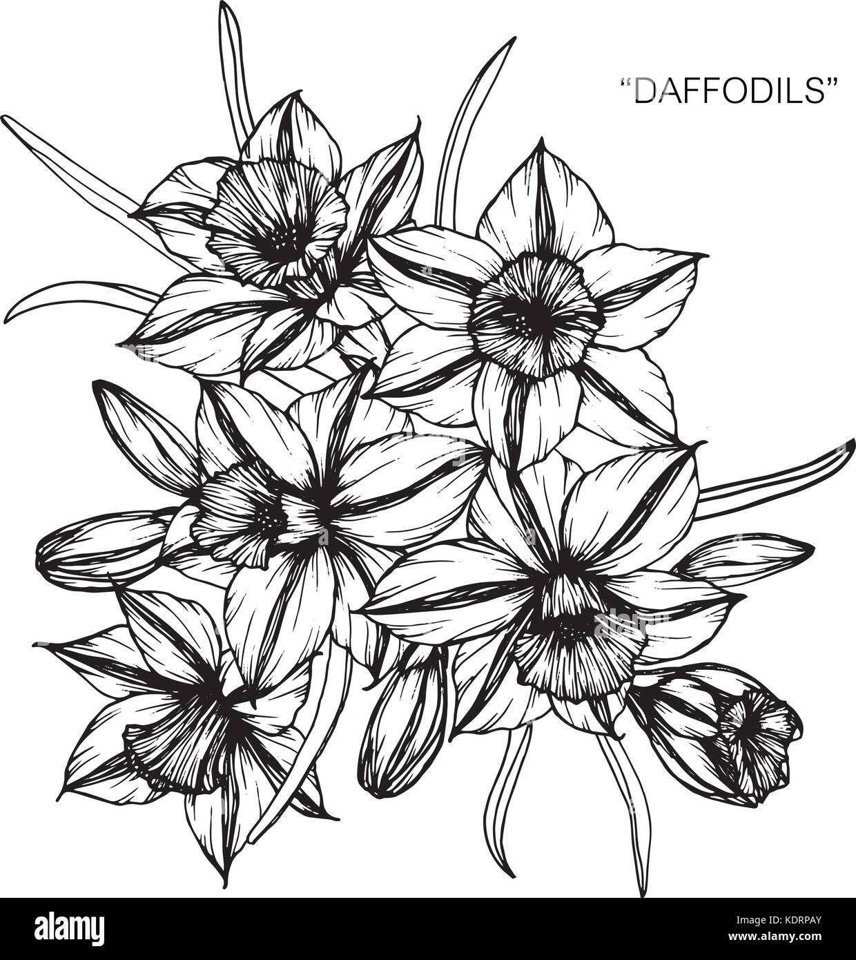 Blumenstrauß Aus Narzisse Blumen Zeichnung Vektor Abbildung Bild
