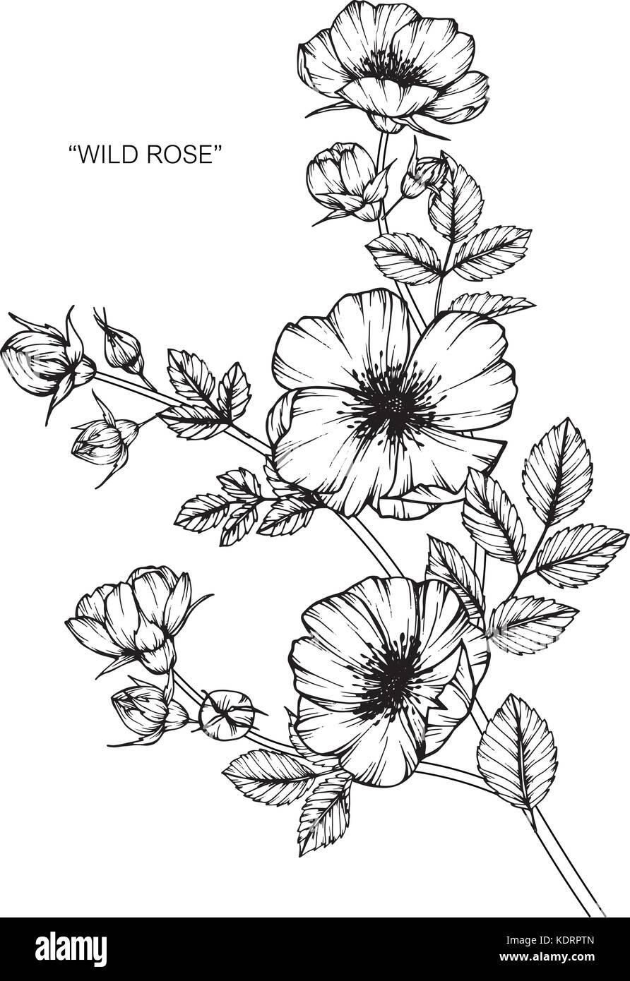 wilde rosen blume zeichnen abbildung schwarz und wei mit line art vektor abbildung bild. Black Bedroom Furniture Sets. Home Design Ideas