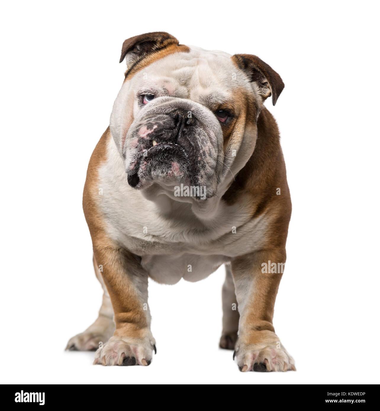 Fein Bulldog Farbung Seiten Galerie - Malvorlagen Von Tieren - ngadi ...