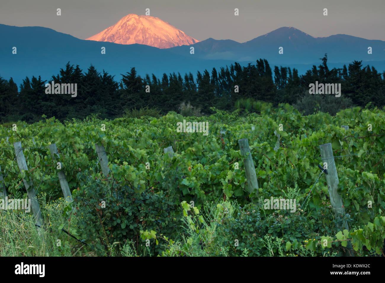 Erstes Licht auf Vulkan Tupungato von den Weinbergen der Uco Tal, Provinz Mendoza, Argentinien Stockbild
