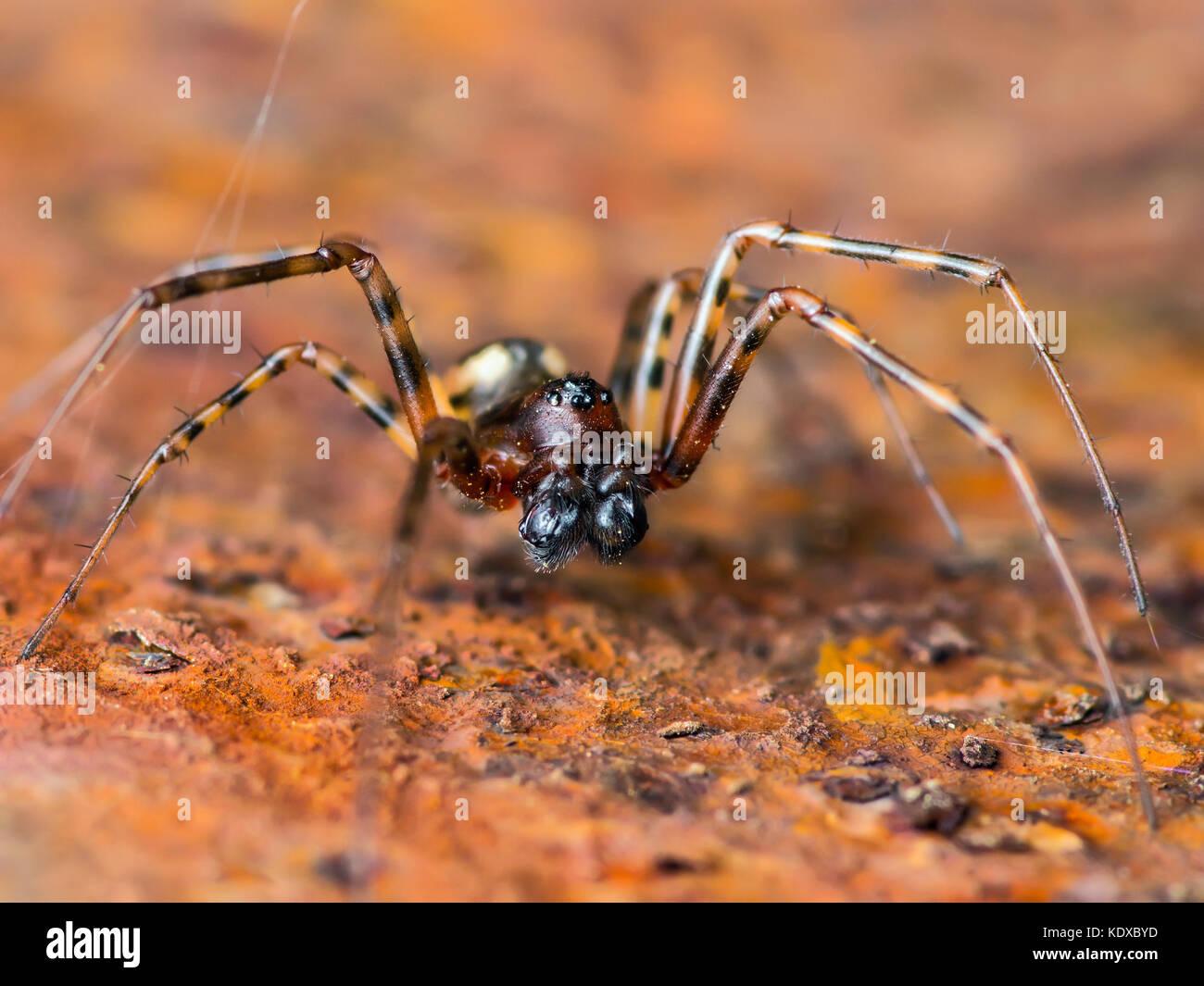 Gruselige spinne Insekt auf Rusty Hintergrund Stockbild
