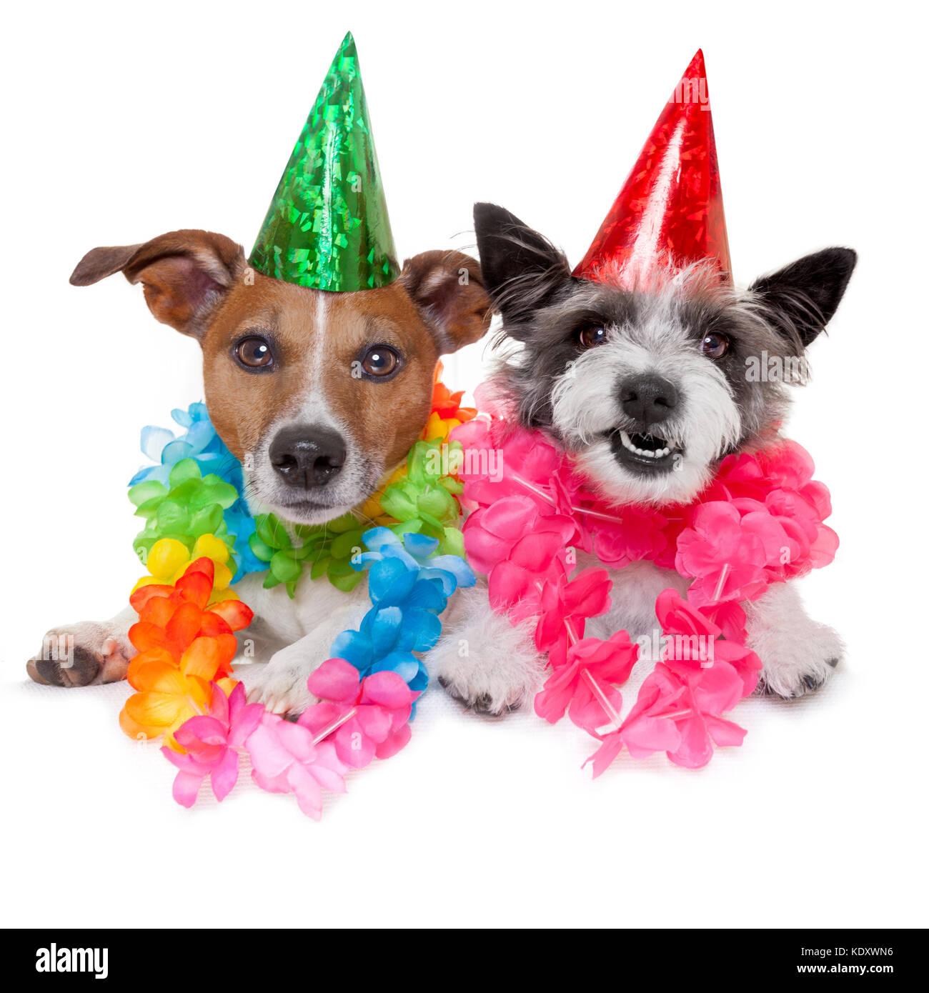 Zwei Lustige Geburtstag Hunde Schliessen Sie Zusammen Als Paar Feiern