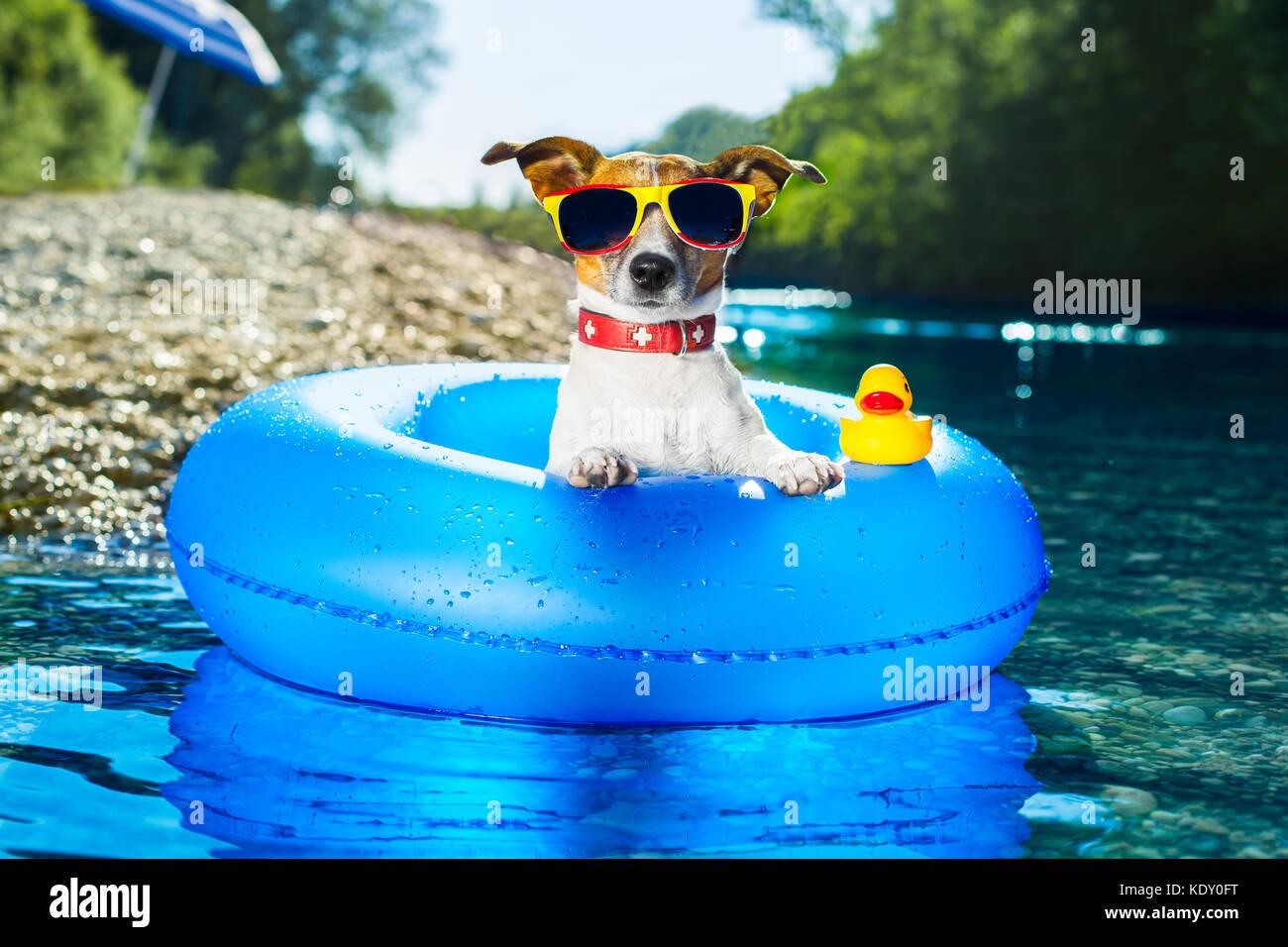 hund auf blaue luftmatratze im wasser erfrischend stockfoto bild 163476988 alamy. Black Bedroom Furniture Sets. Home Design Ideas