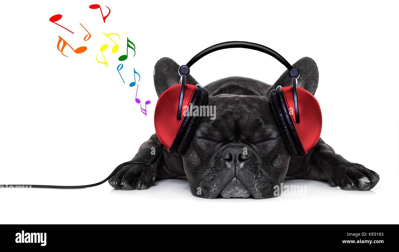 franz sische bulldogge hund h ren von musik ber kopfh rer oder kopfh rer beim entspannen oder. Black Bedroom Furniture Sets. Home Design Ideas