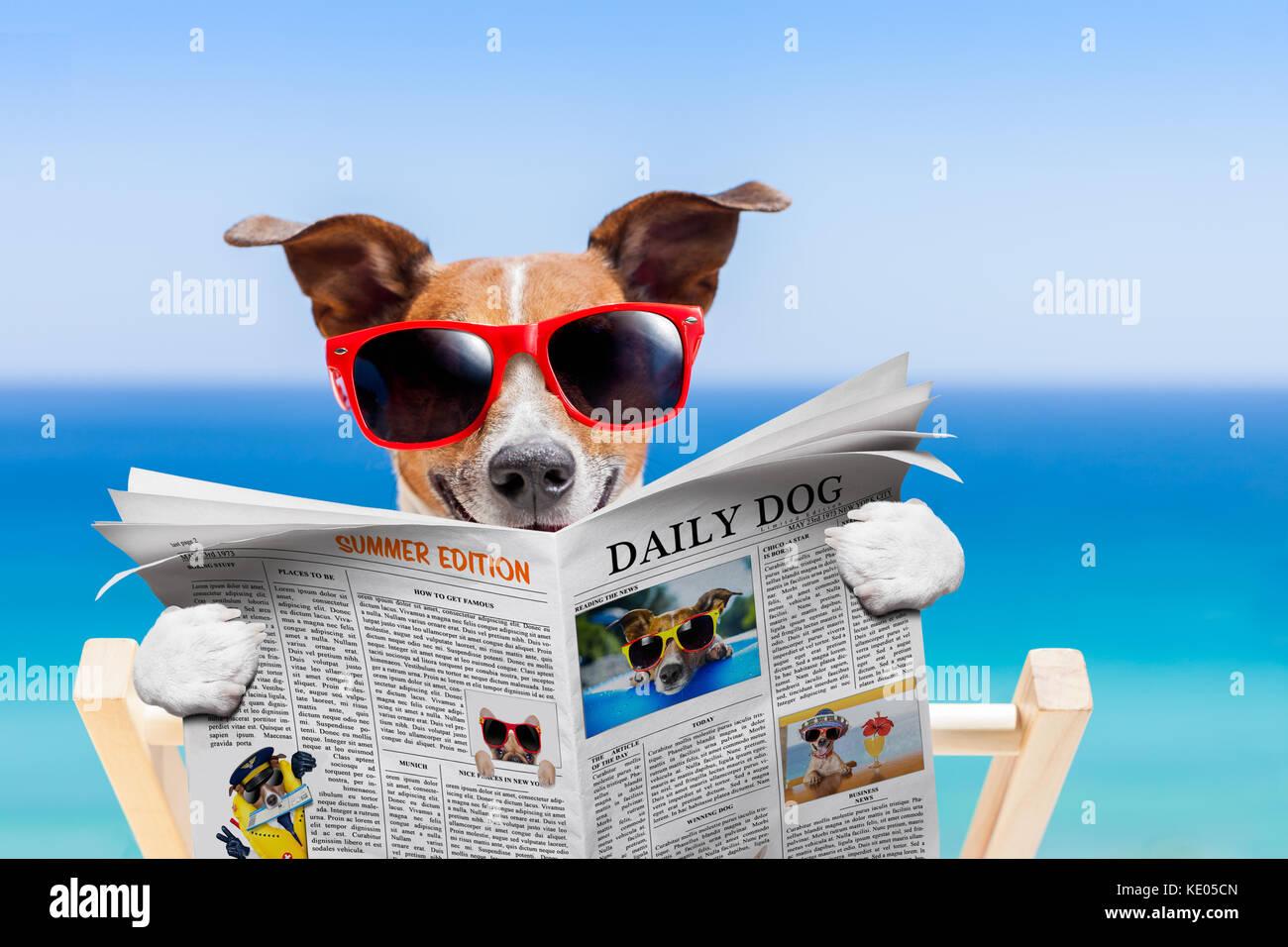 Jack Russell Hund, lesen Zeitung auf Hängematte am Strand Sommer ...