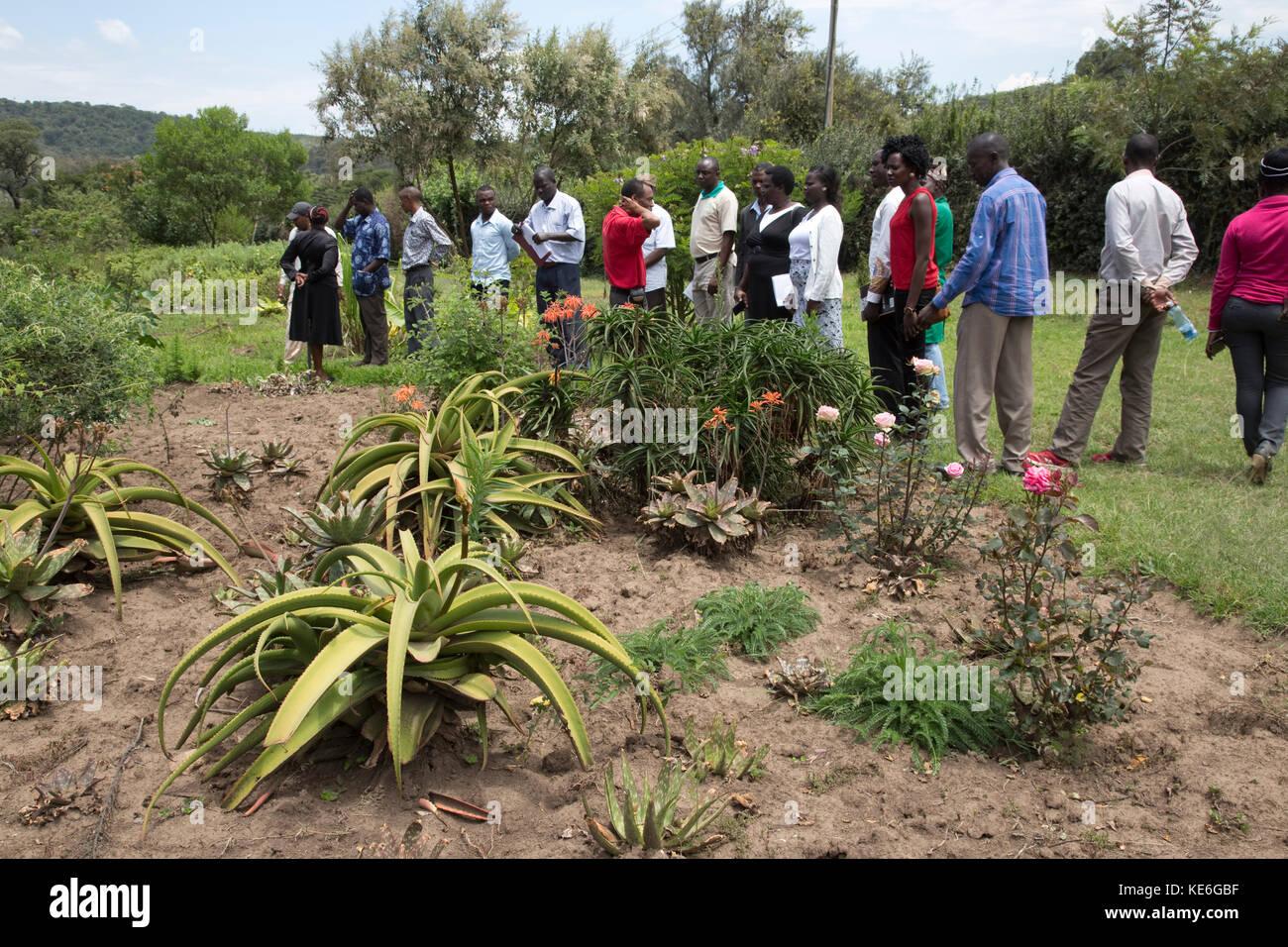 Afrikanische Besuchslehrerinnen Kräutergarten mit Heilpflanzen zu machen traditionelle Medizin Afrika Kenia Stockbild