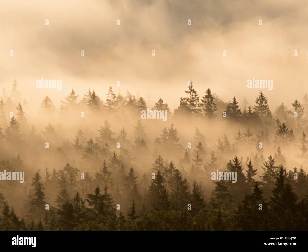 Schöne herbstliche Landschaft mit Bergblick, morgen nebligen Tal in Sunrise. neblige Streifen zwischen Baumkronen Stockbild
