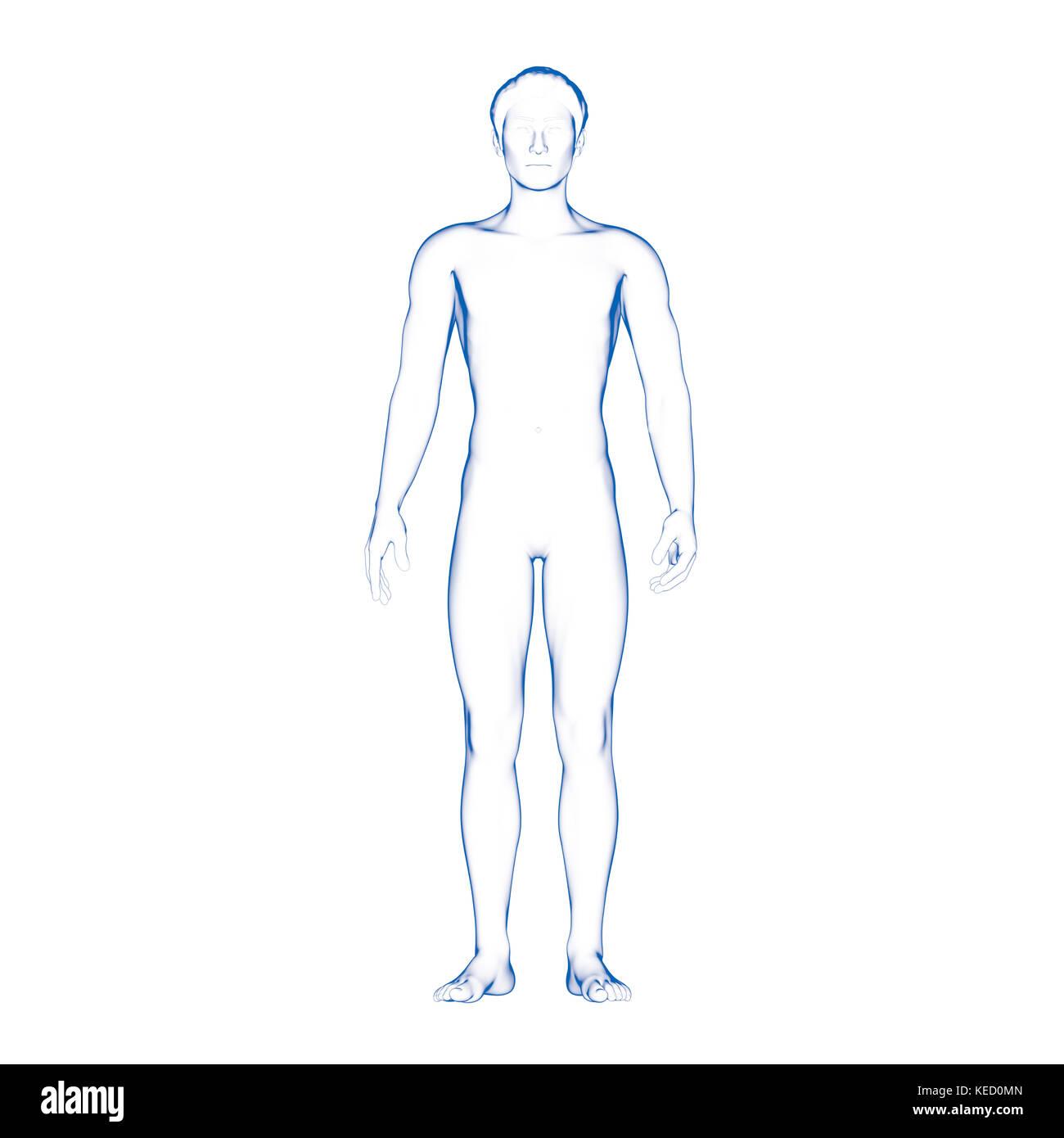 Großzügig Organ Diagramm Männliche Körper Zeitgenössisch ...