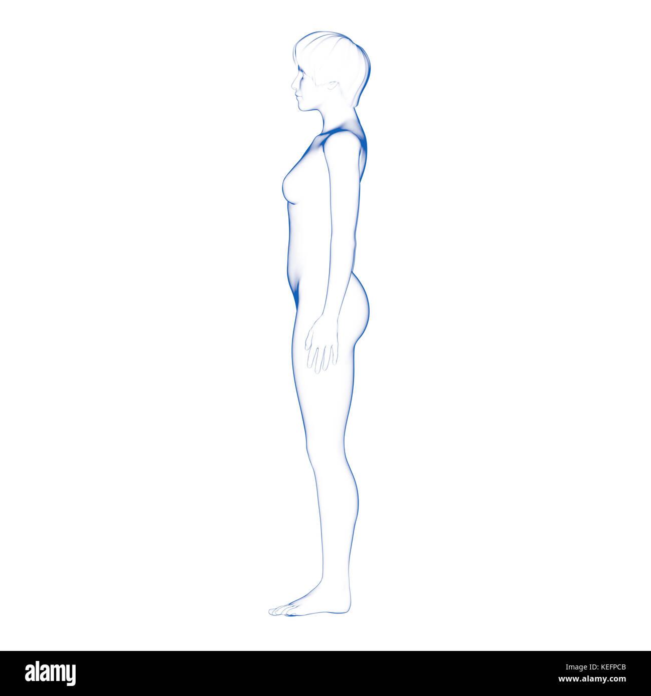 Atemberaubend Menschlichen Weiblichen Körpers Bilder Bilder ...