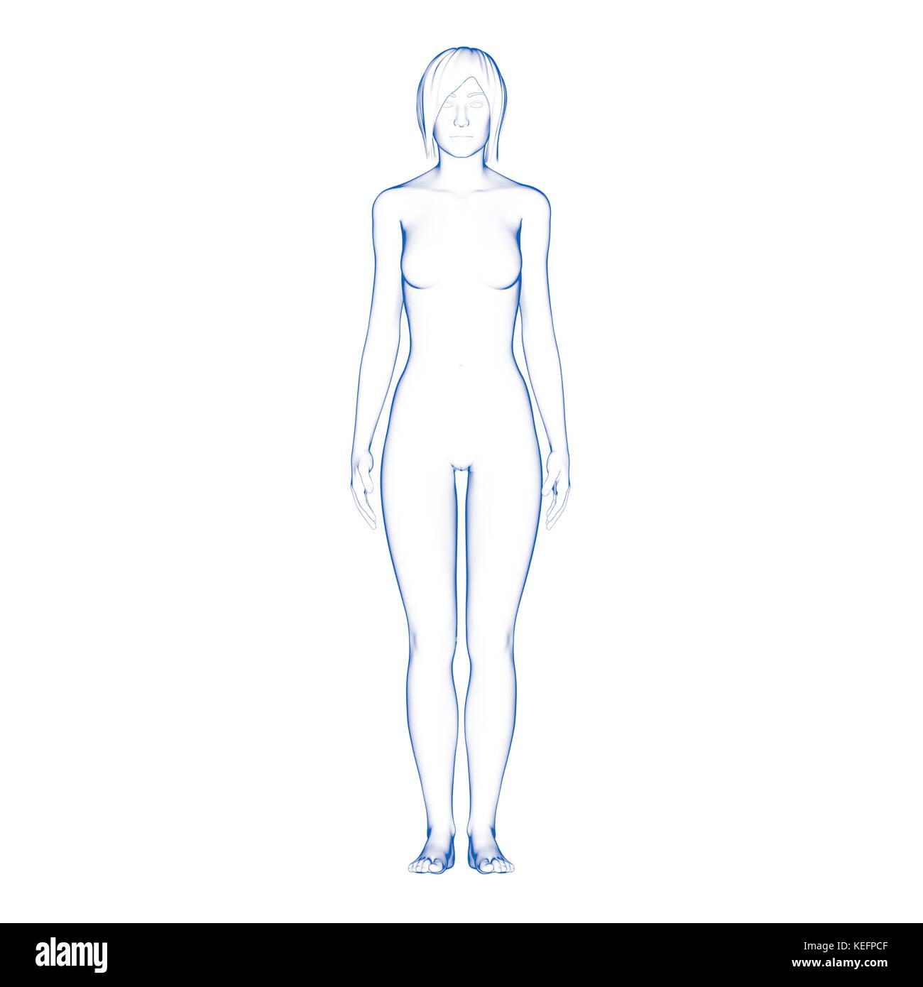 Beste Körperbild Von Organen Weiblich Ideen - Menschliche Anatomie ...