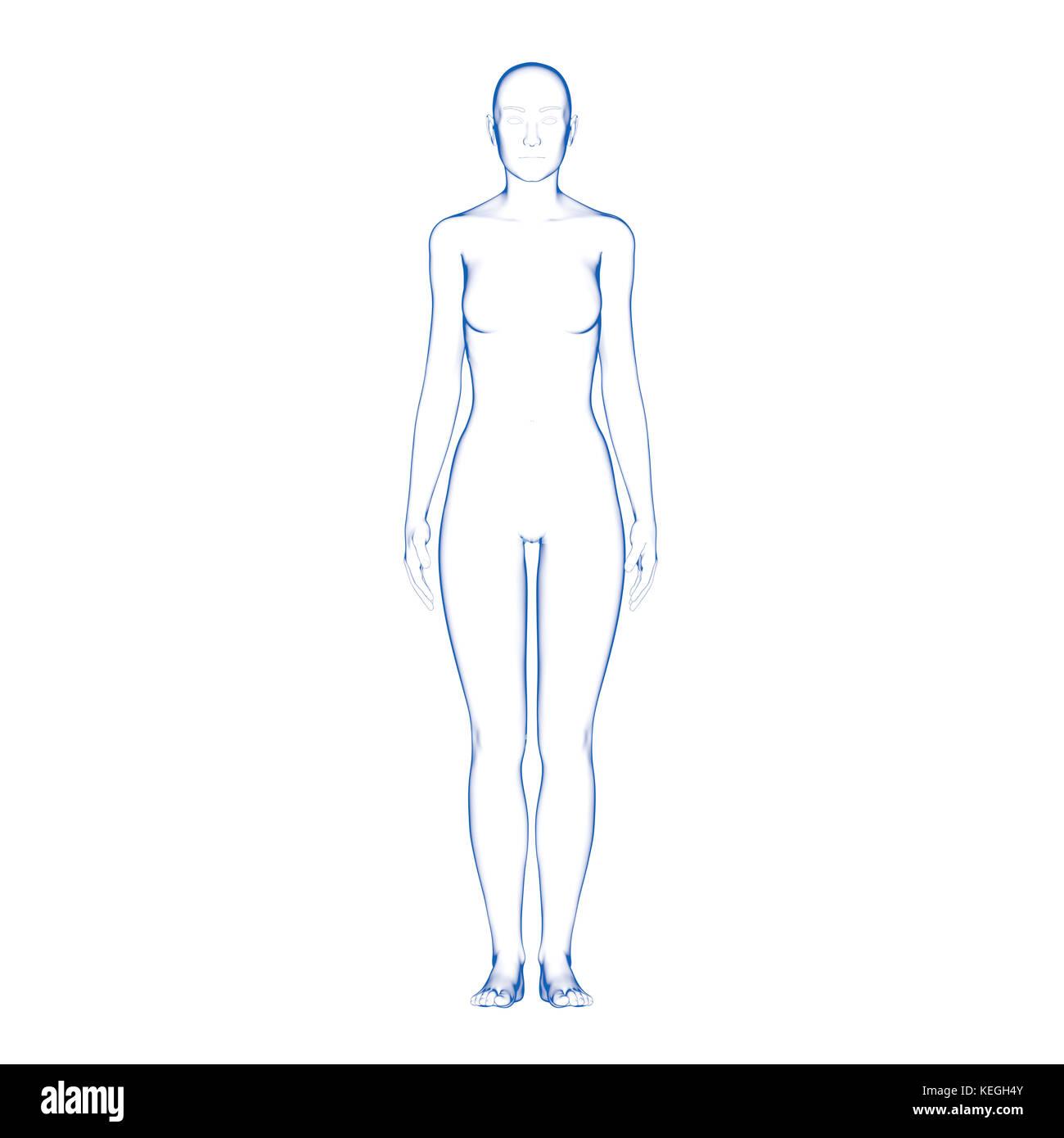 Human Body Stockfotos Human Body Bilder Alamy