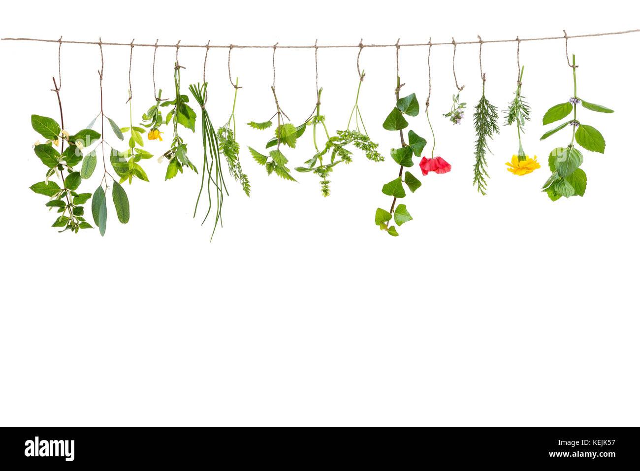 Frische flovouring Kräuter und essbare Blüten hängen an einer Schnur auf einem Interieur backgroung Stockbild