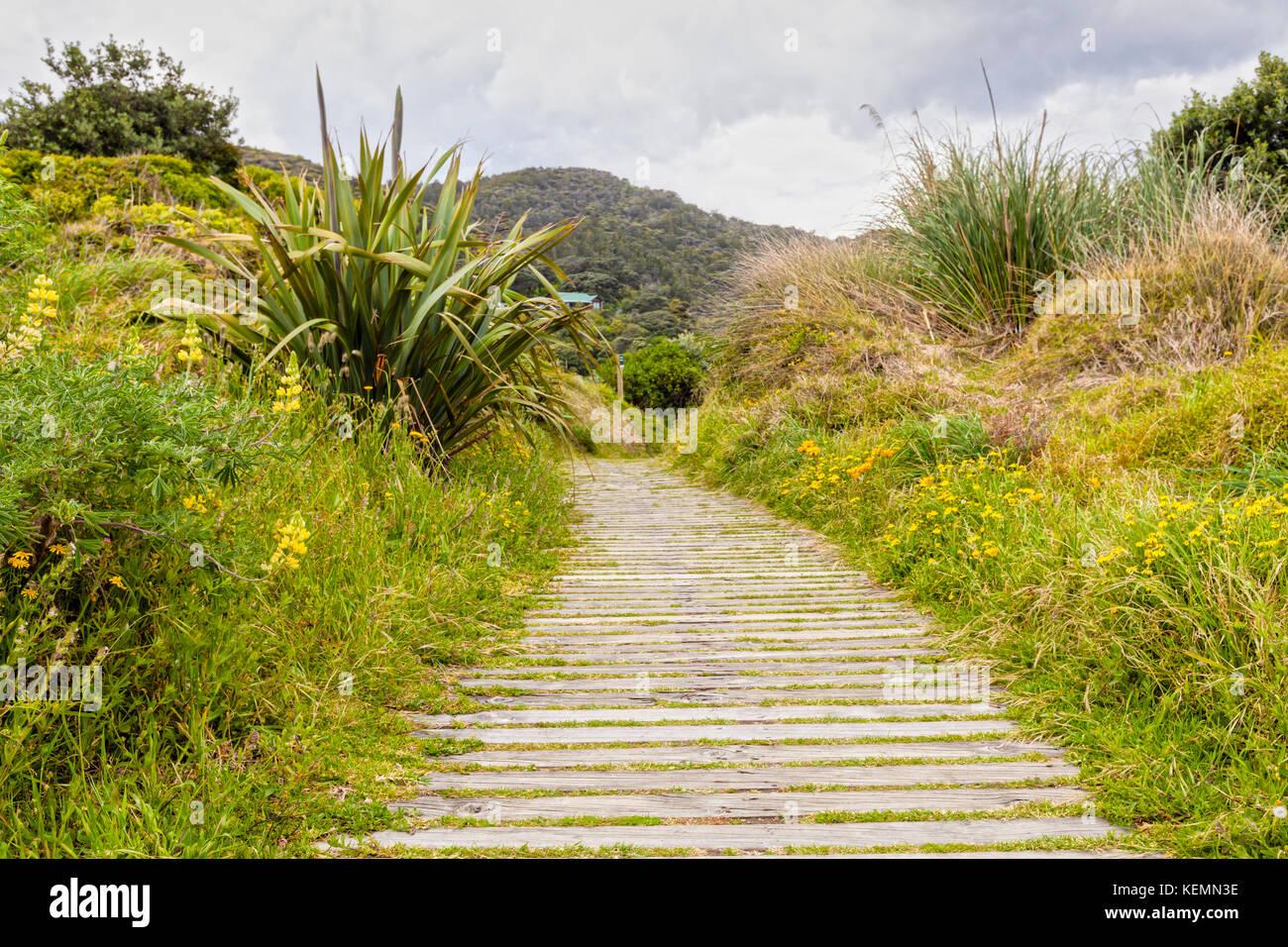 Boardwalk durch Vegetation bedeckten Sanddünen, Piha, Auckland, Neuseeland, auf ein weiches Licht. Stockbild