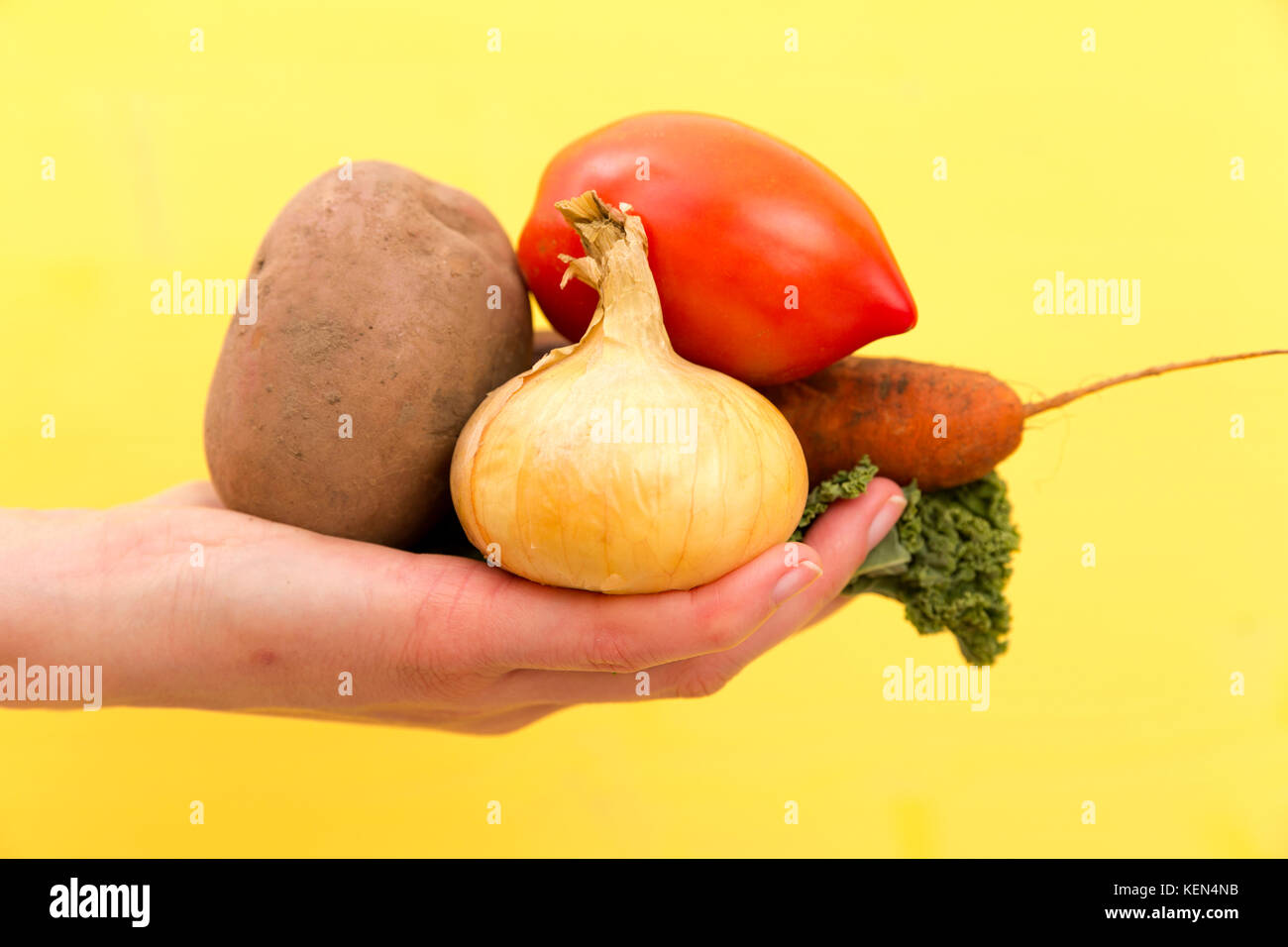 Bio Gemüse.frau Hände mit frisch geernteten Gemüse Karotten, Zwiebeln, grünen, Kartoffel Stockbild