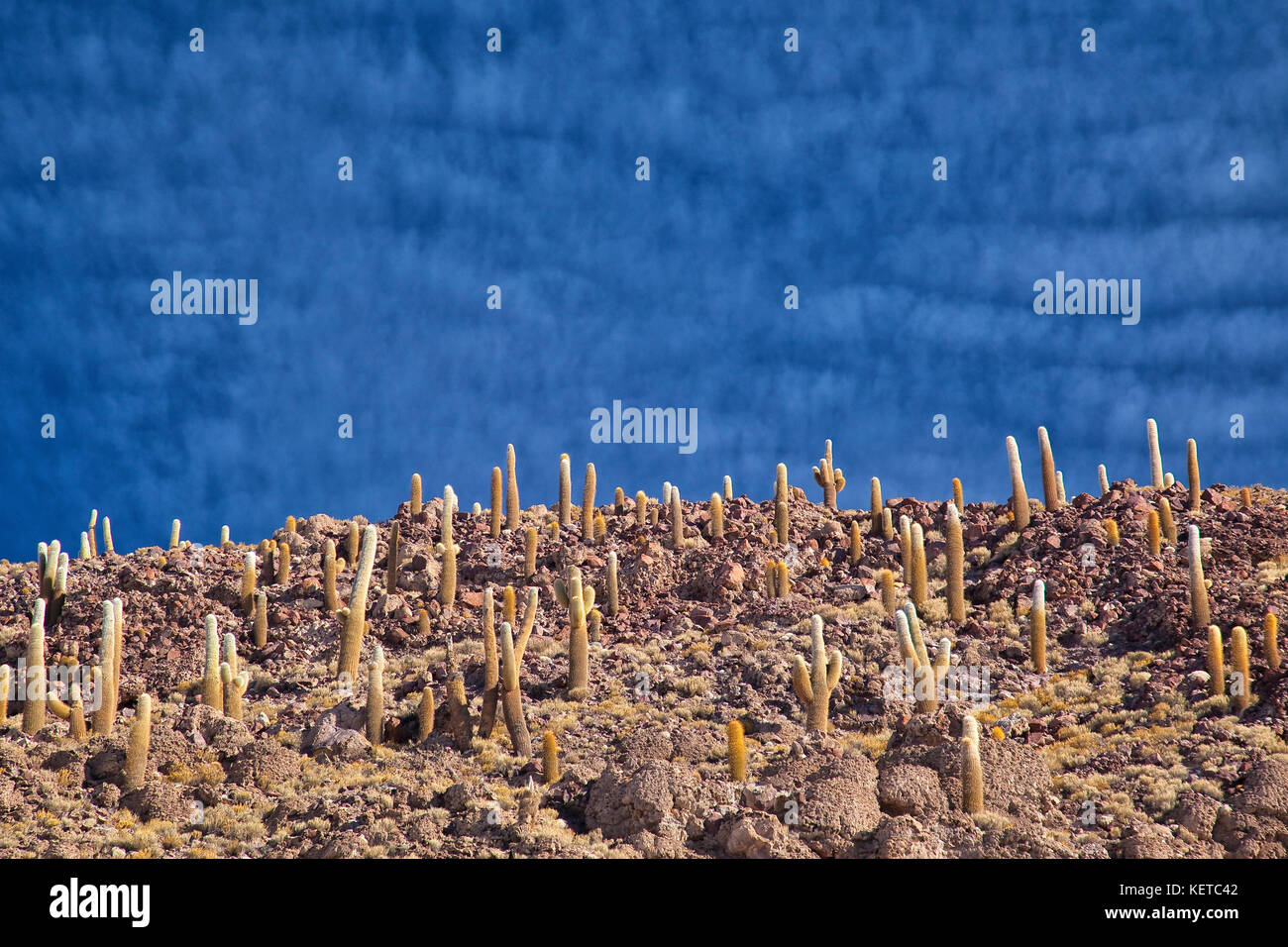 Kaktus auf Hügeln und Felsen der Isla Incahuasi in der Salar de Uyuni Süden Lipez Bolivien Südamerika. Stockbild