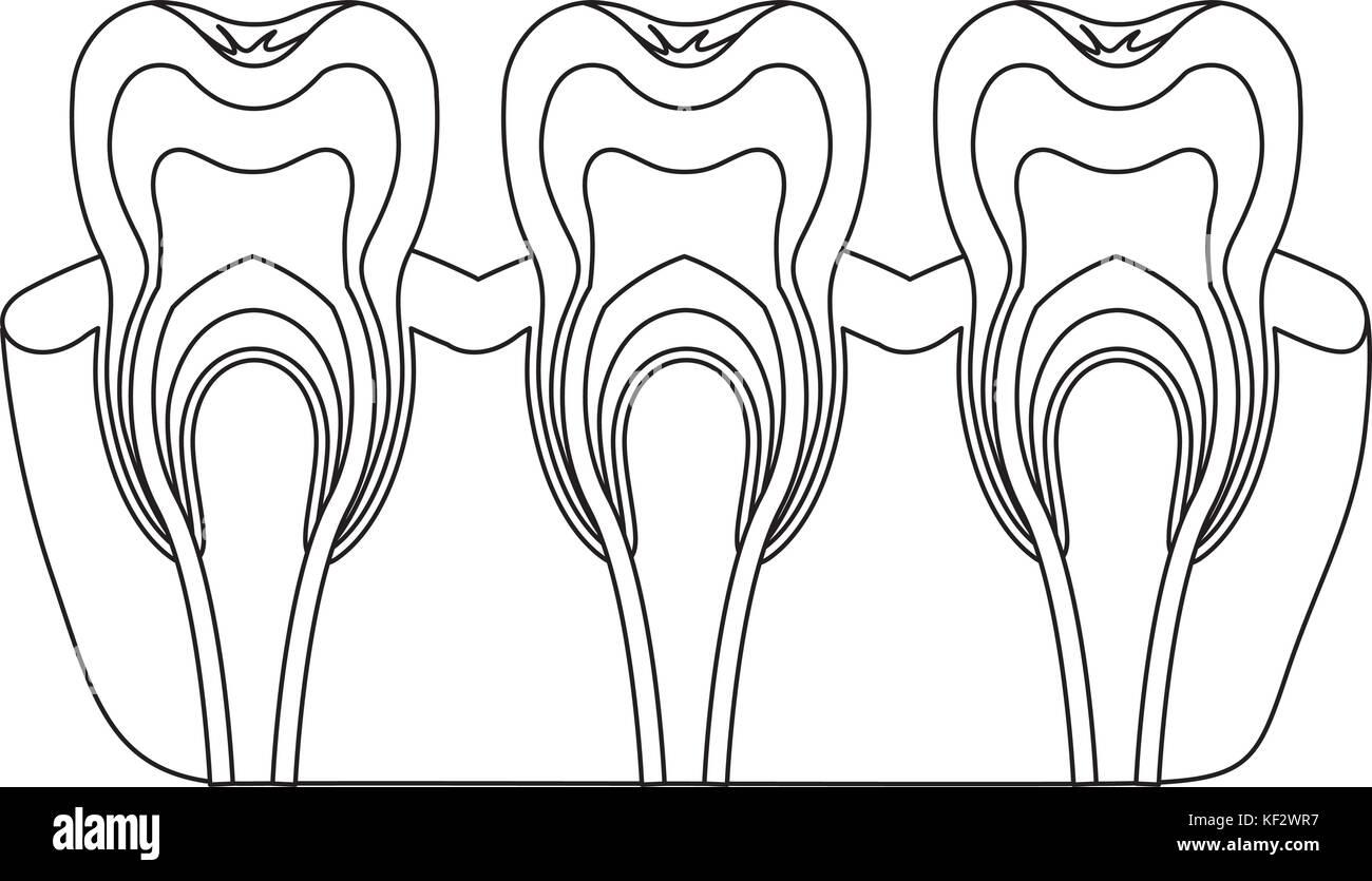 Tooth Root Stockfotos & Tooth Root Bilder - Alamy