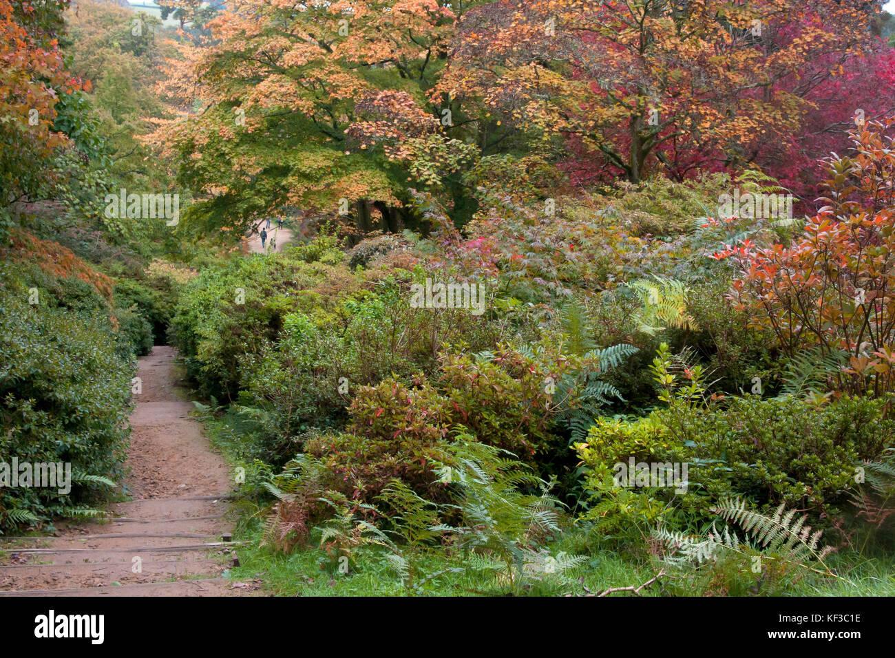Winkworth Arboretum im Herbst, Surrey, England Stockbild