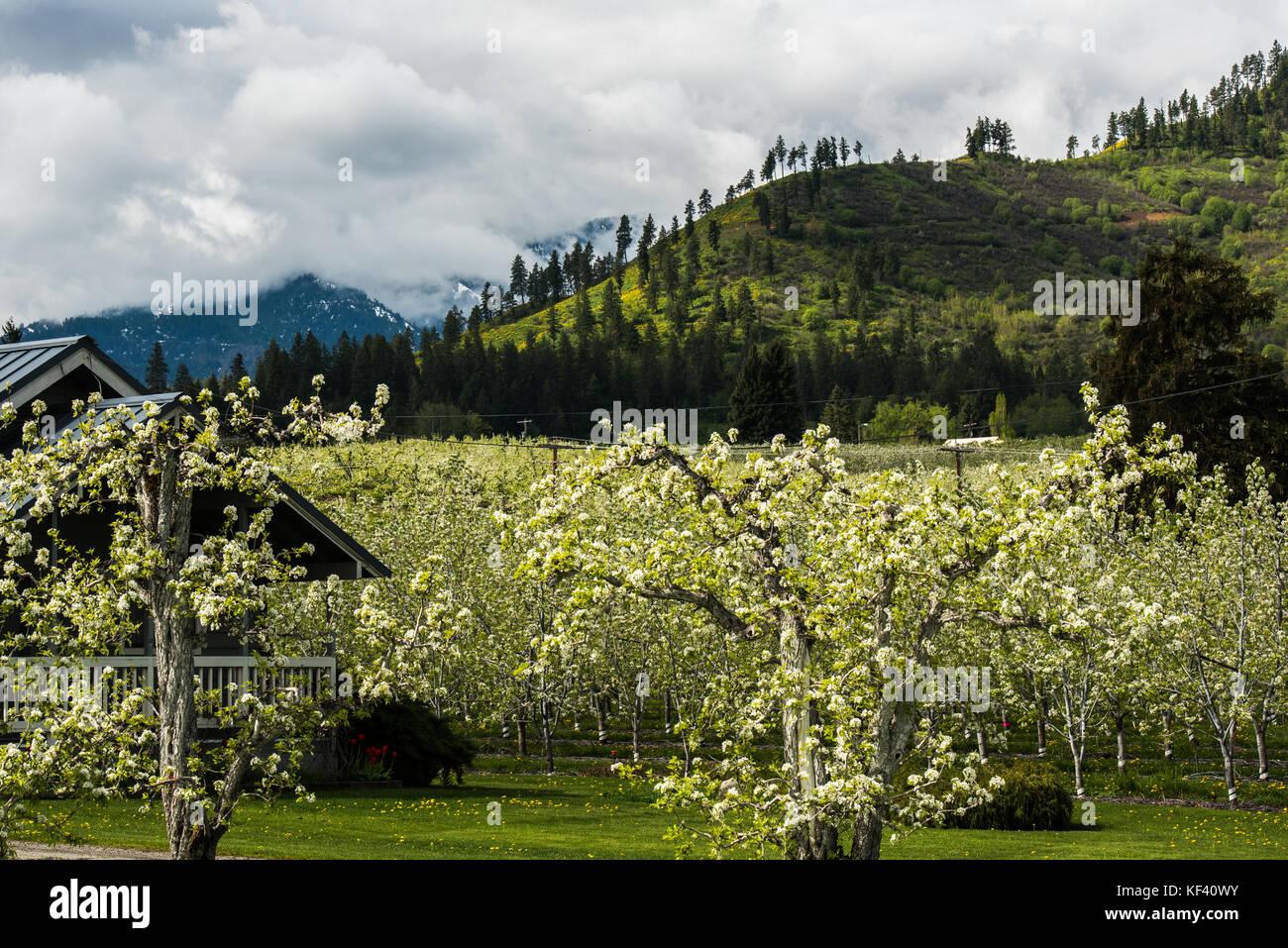 apple orchards stockfotos apple orchards bilder alamy. Black Bedroom Furniture Sets. Home Design Ideas