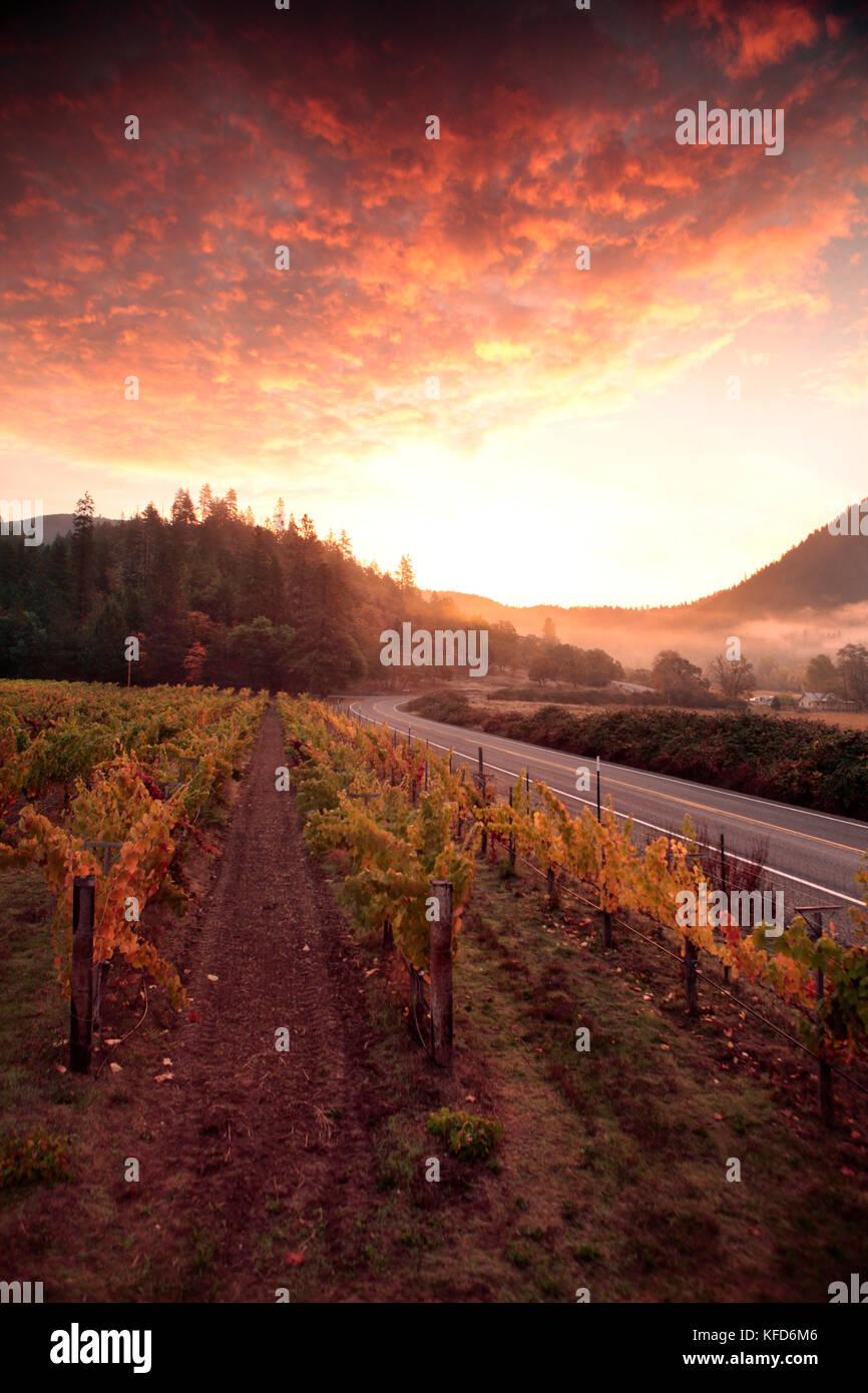 Usa, Oregon, Medford, woolridge Creek Winery im Herzen der Applegate River Valley im südlichen Oregon gelegen ist, Stockfoto