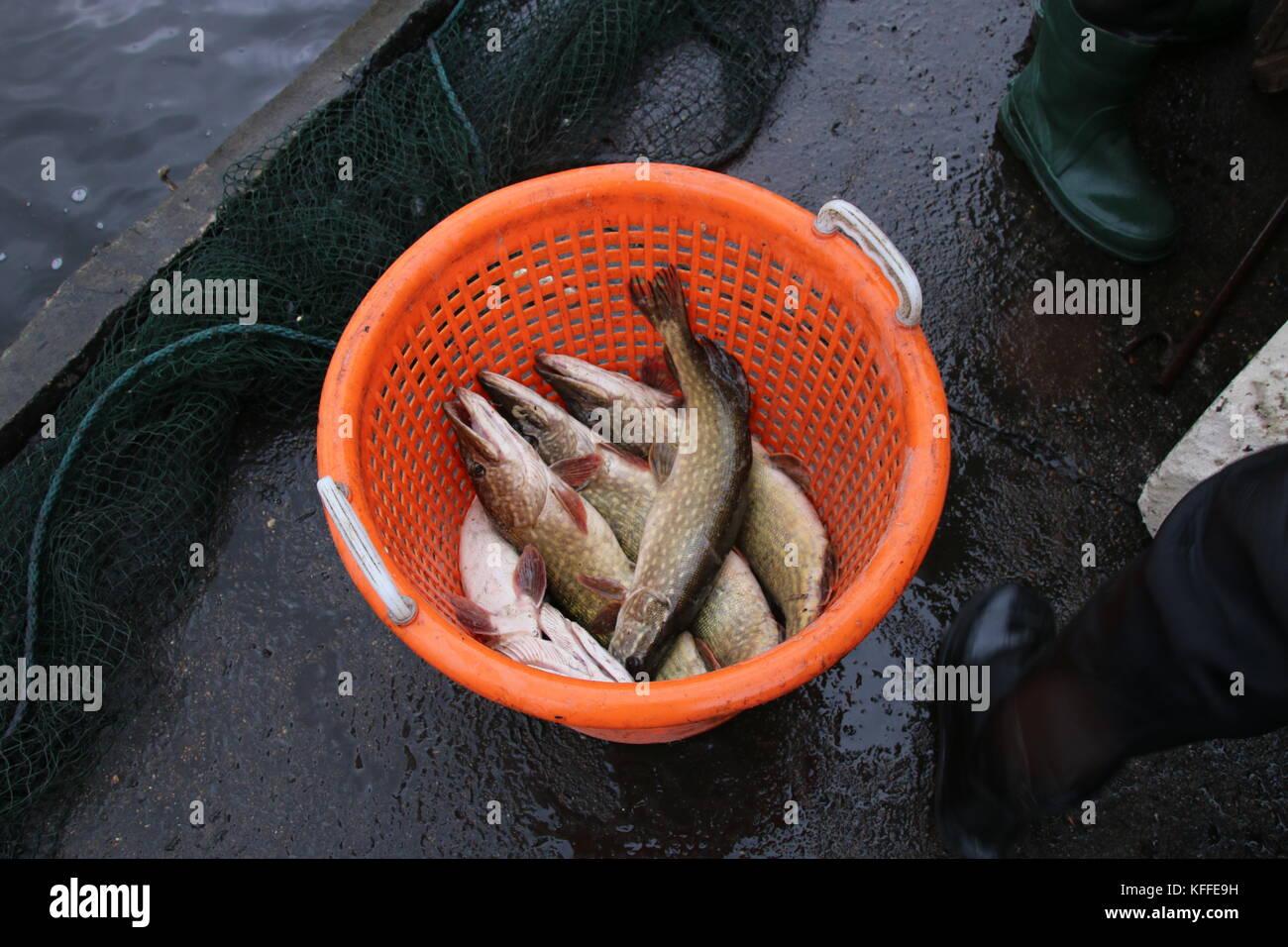 ist viel Fisch