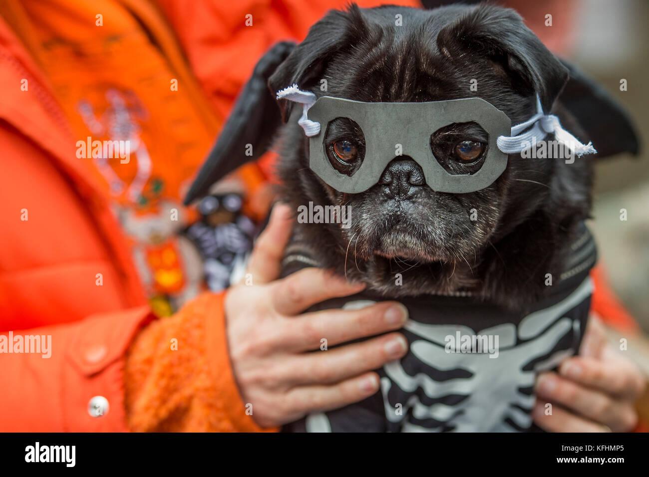 Großzügig Hund Hochzeit Outfits Fotos - Brautkleider Ideen ...