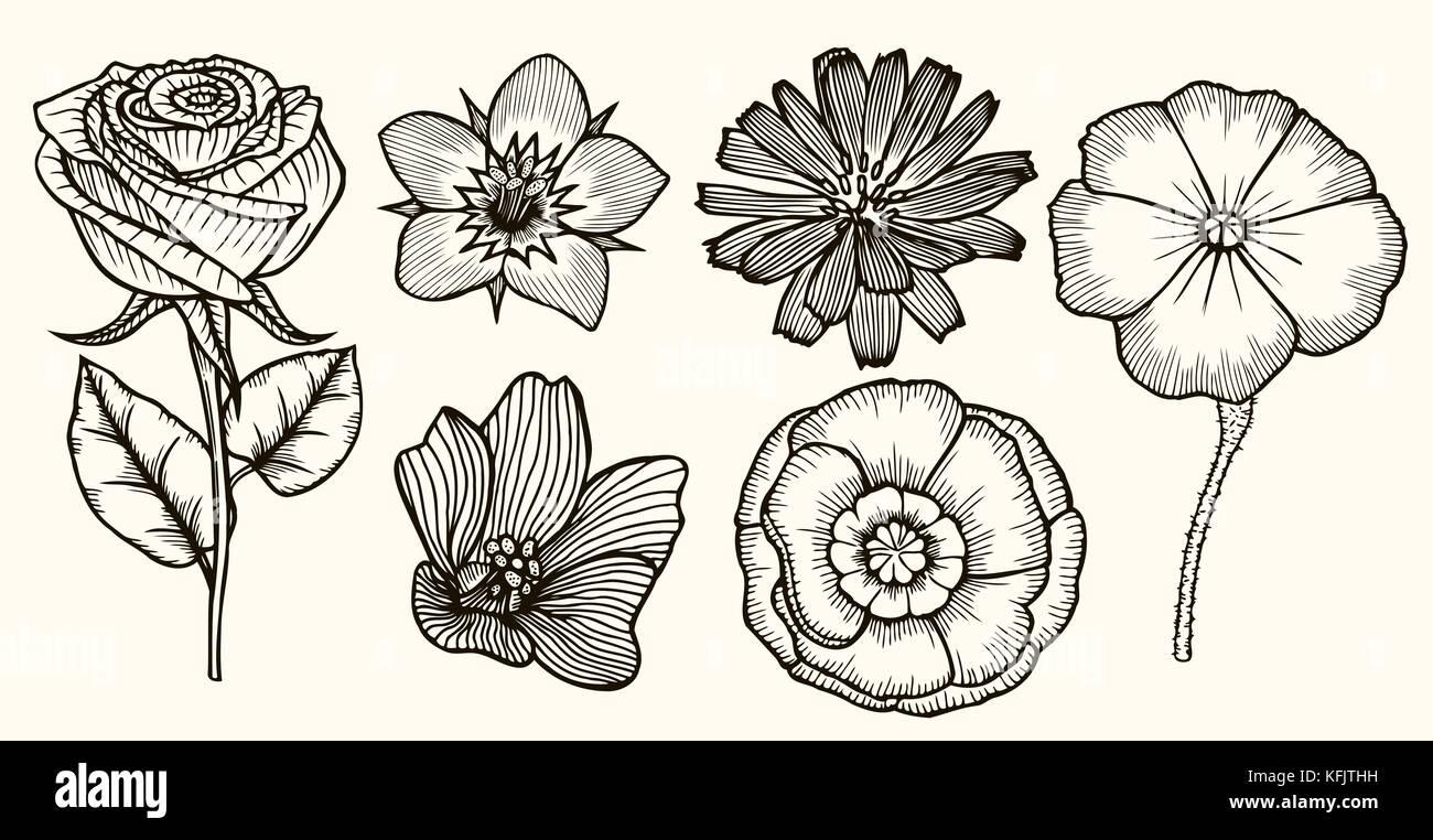 Botanik Set Vintage Blumen Schwarz Weiss Illustration Im Stil Von