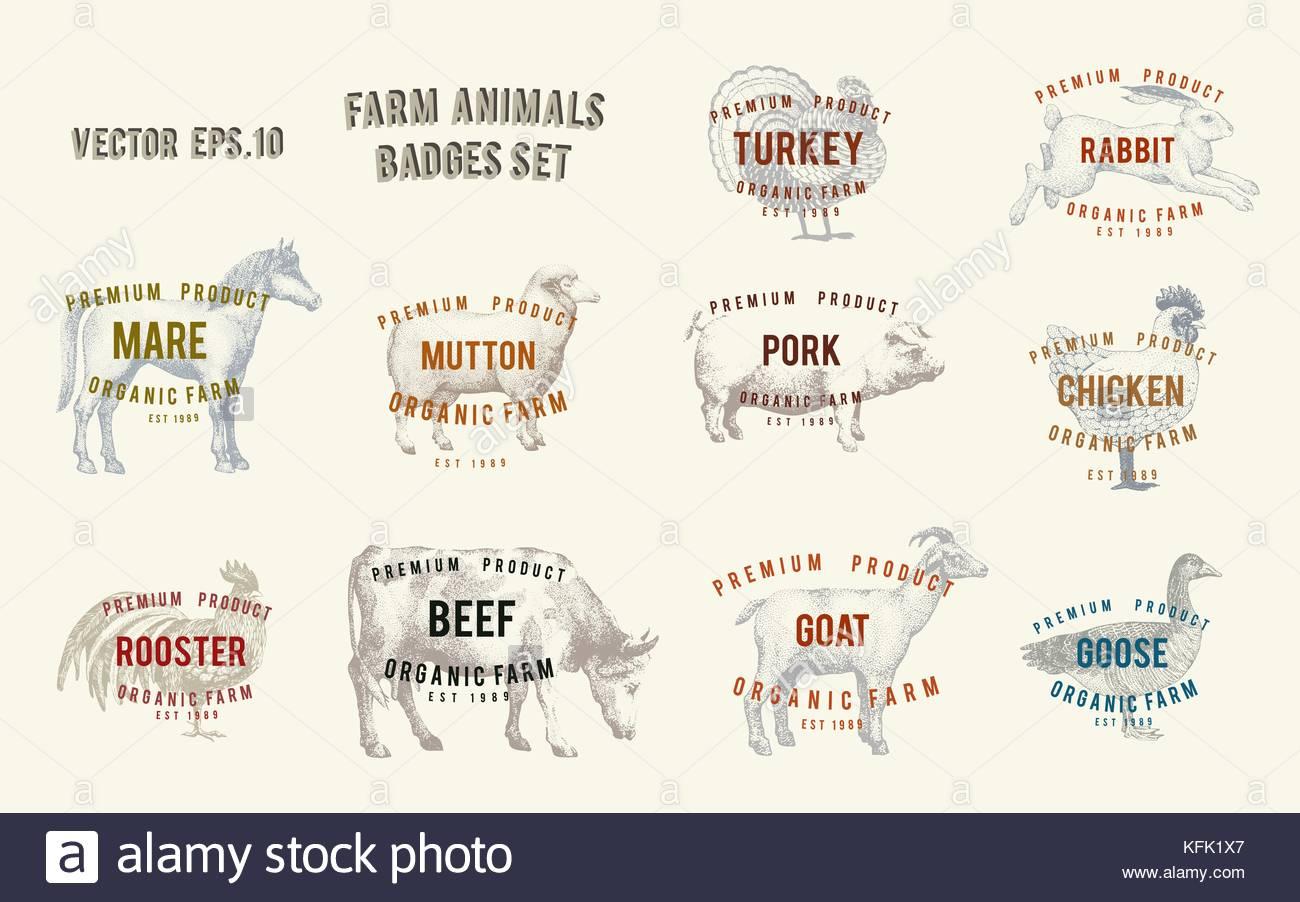 Ungewöhnlich Illustrator Etikettenvorlagen Bilder - Entry Level ...